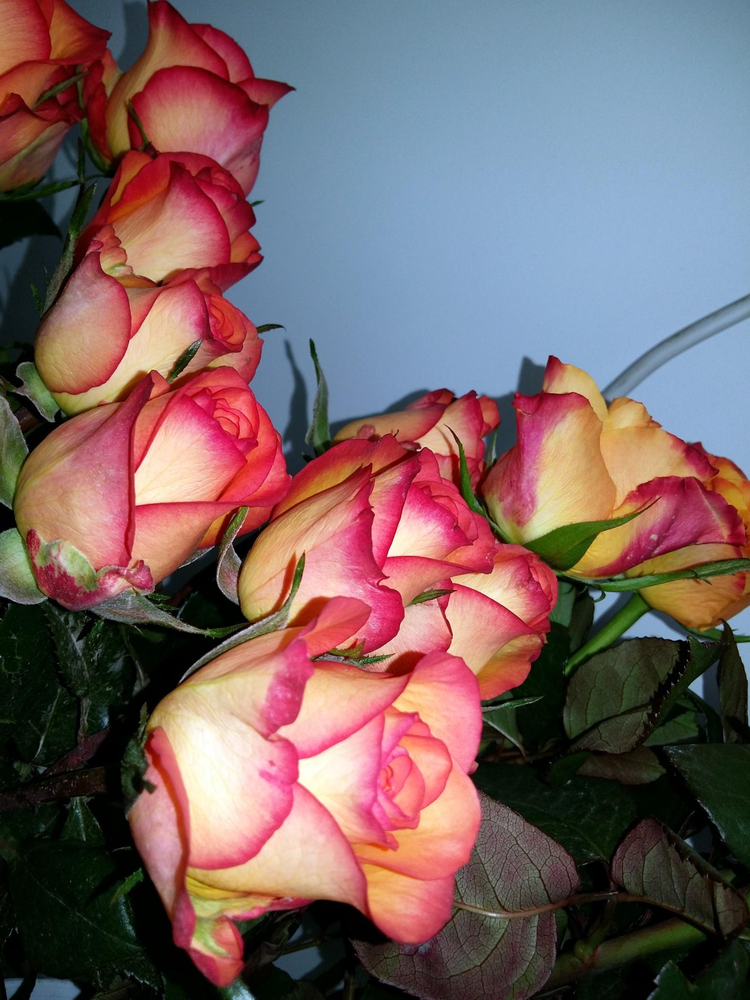 Roses. by uzkuraitiene62