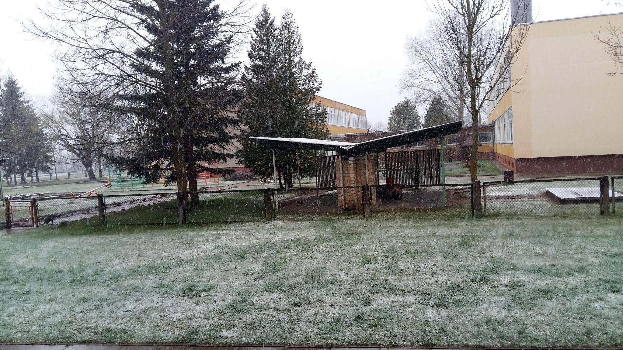 In spring. by uzkuraitiene62