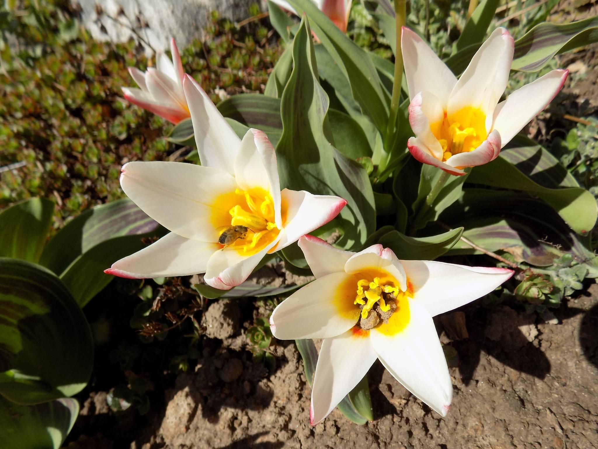 Flowers. by uzkuraitiene62