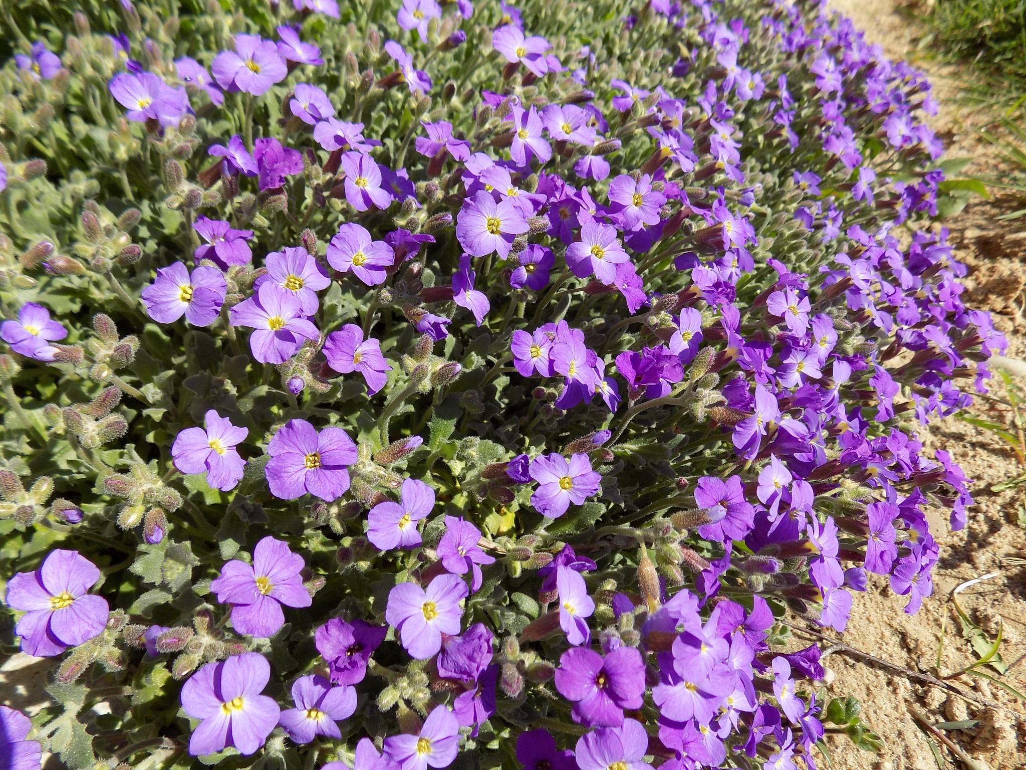 Small flowers by uzkuraitiene62