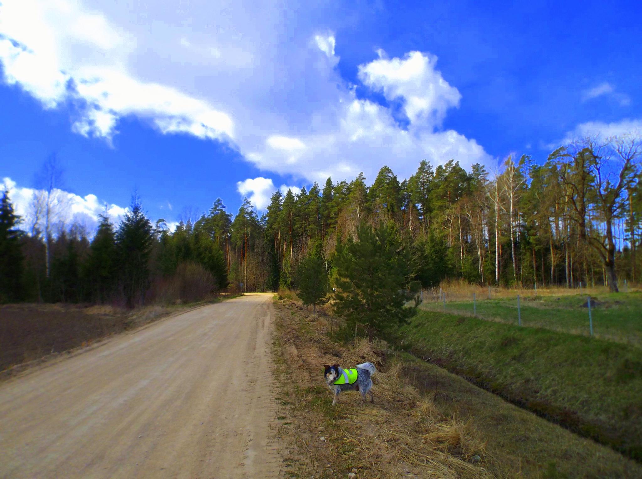 Path in the woods by uzkuraitiene62
