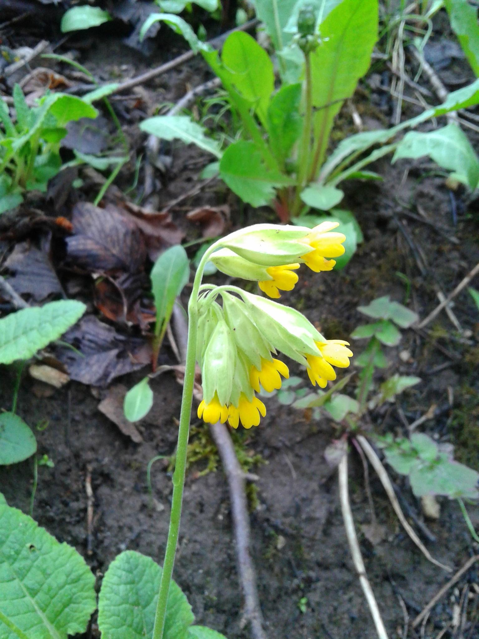 Spring flower by uzkuraitiene62