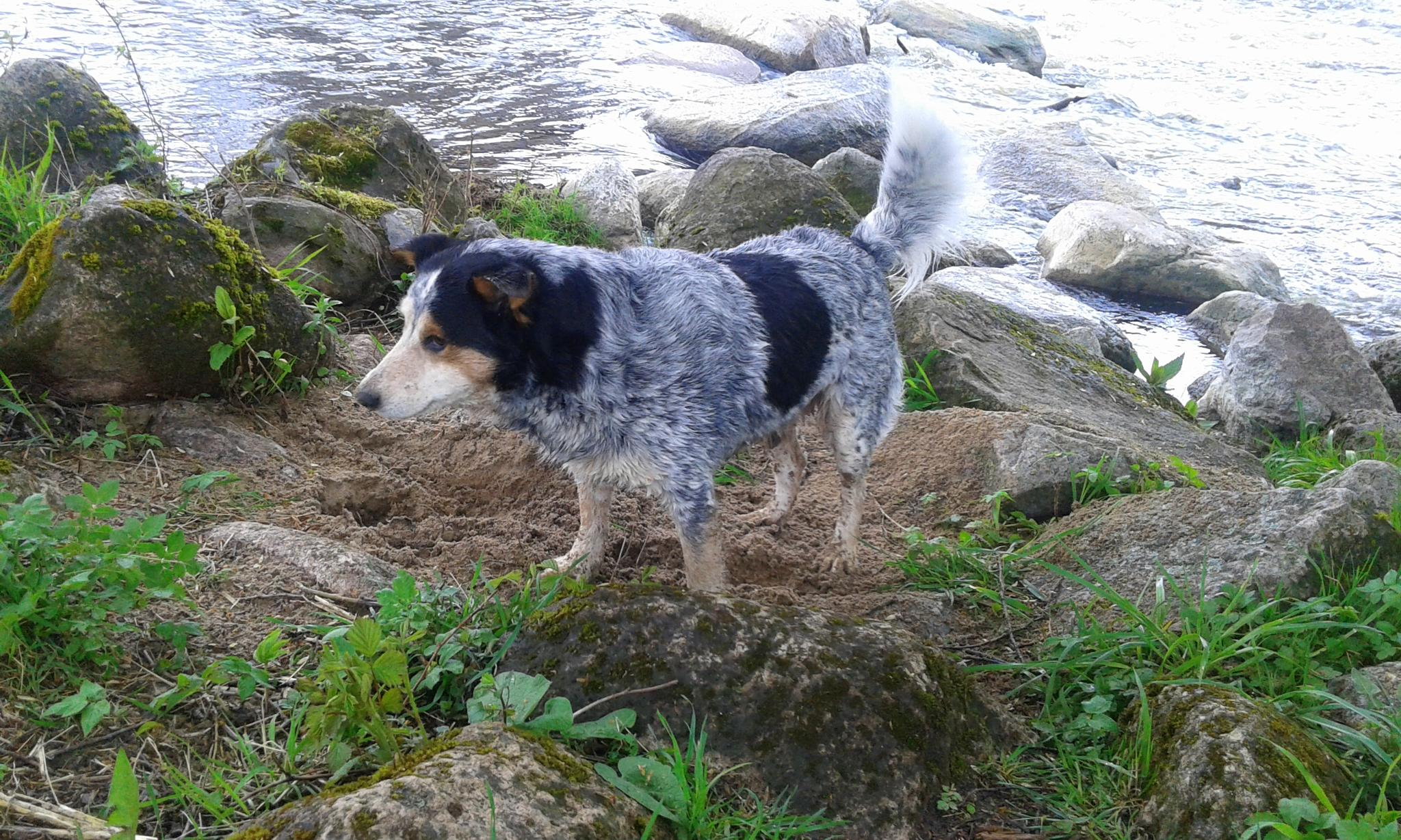 Photo in Animal #dog #stones #nature #river
