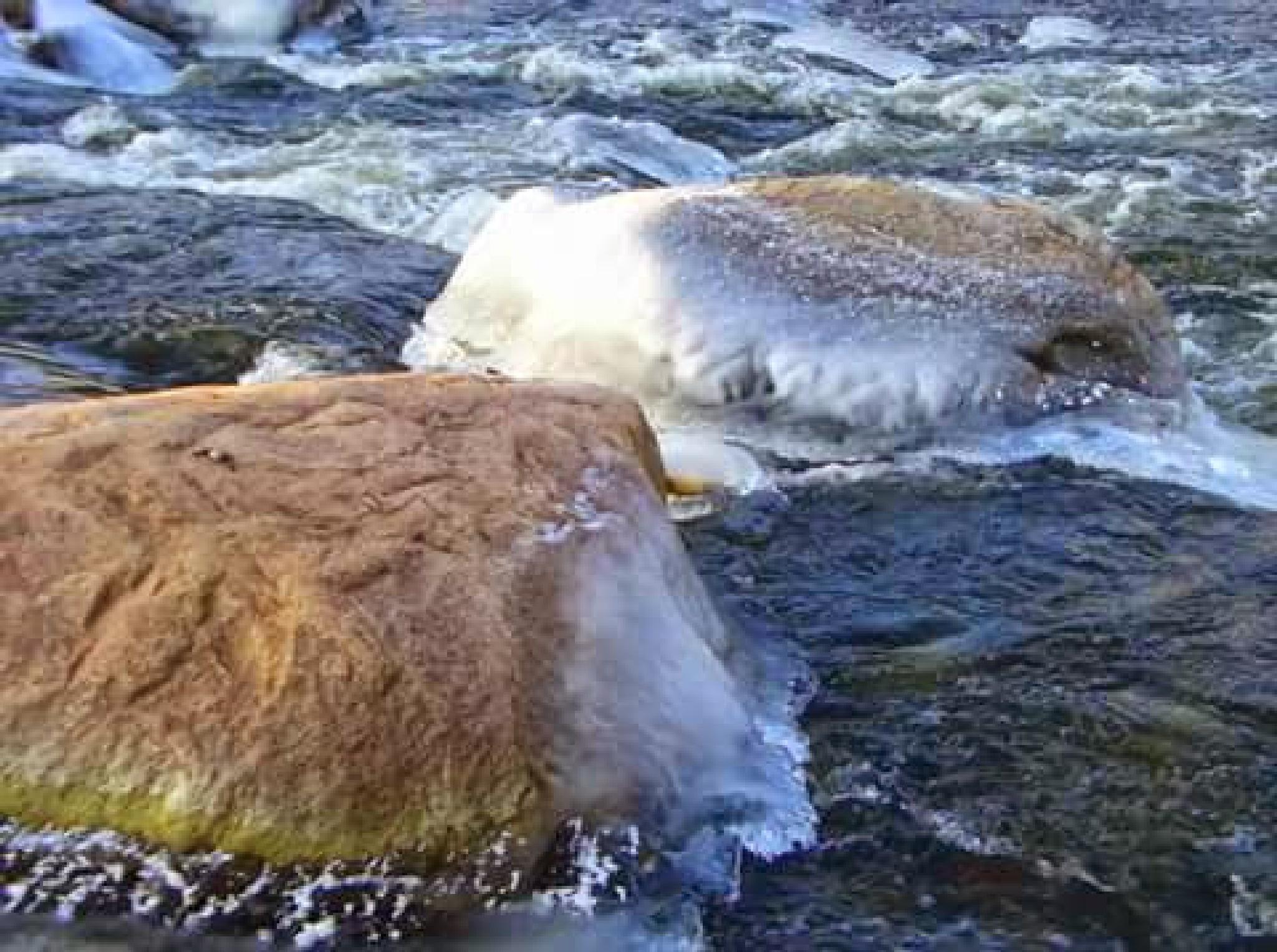 River in winter by uzkuraitiene62