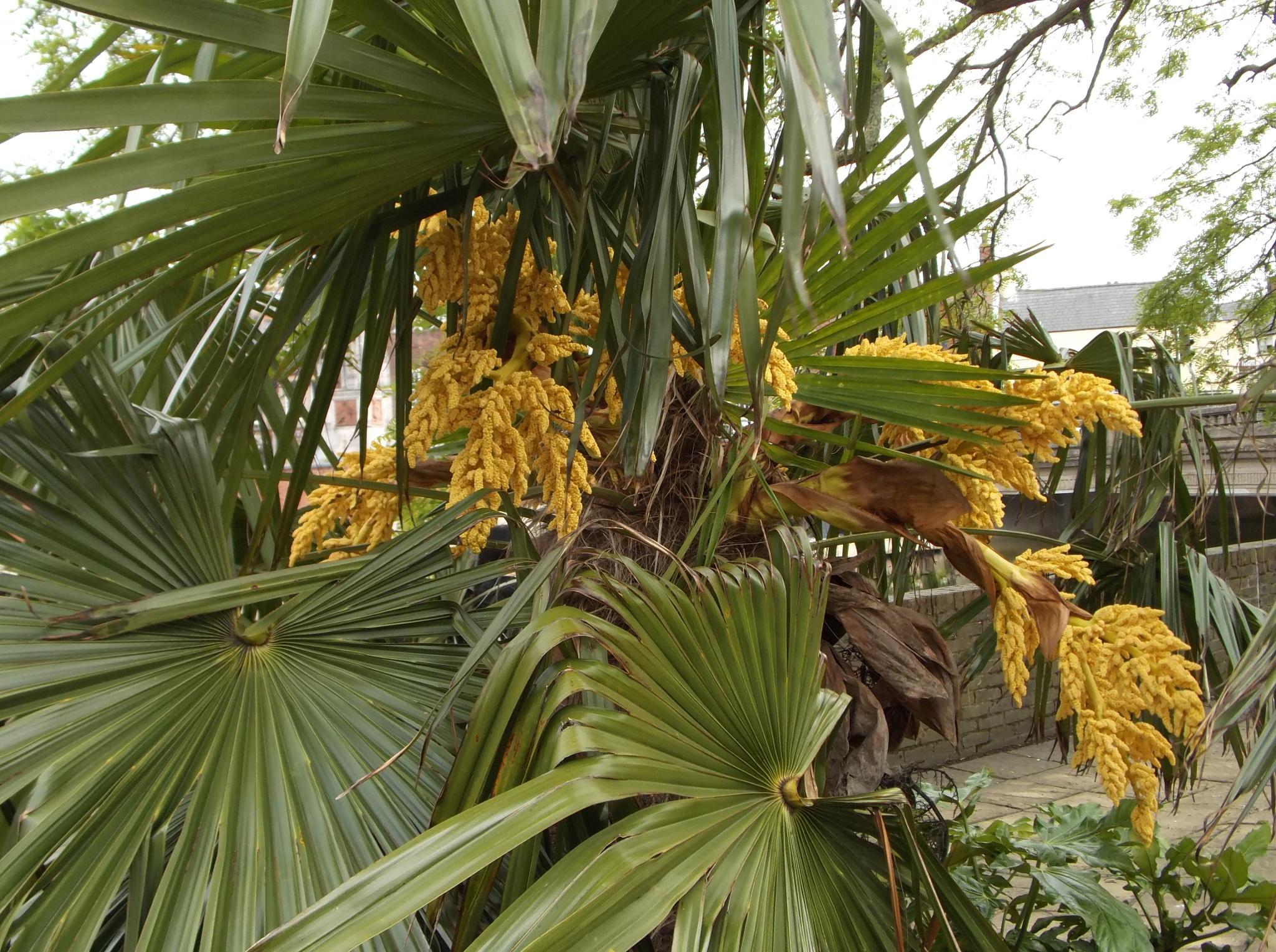 Palm tree by uzkuraitiene62