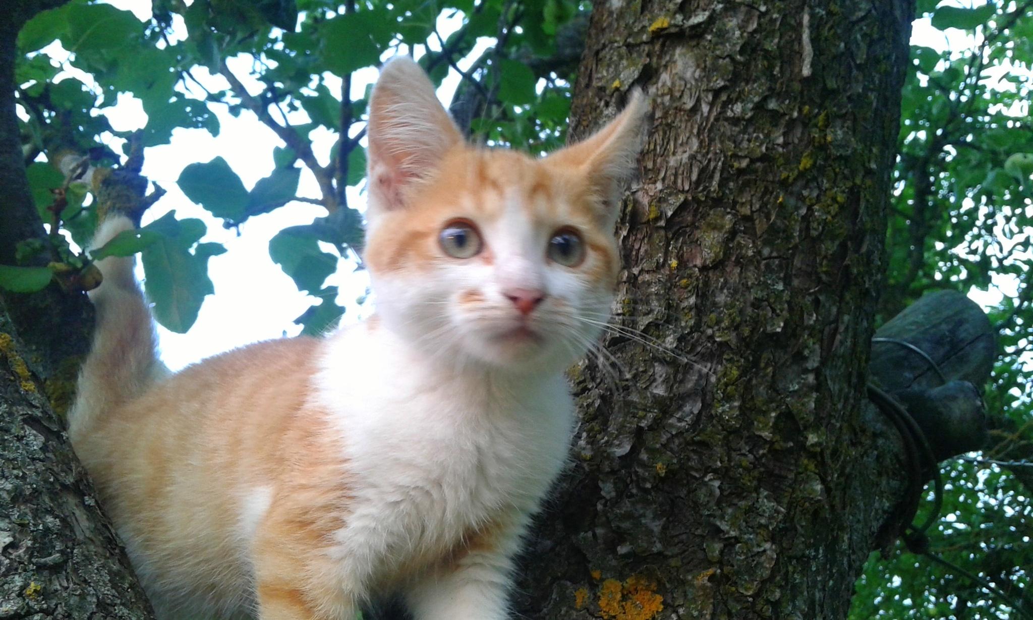 Kitten by uzkuraitiene62