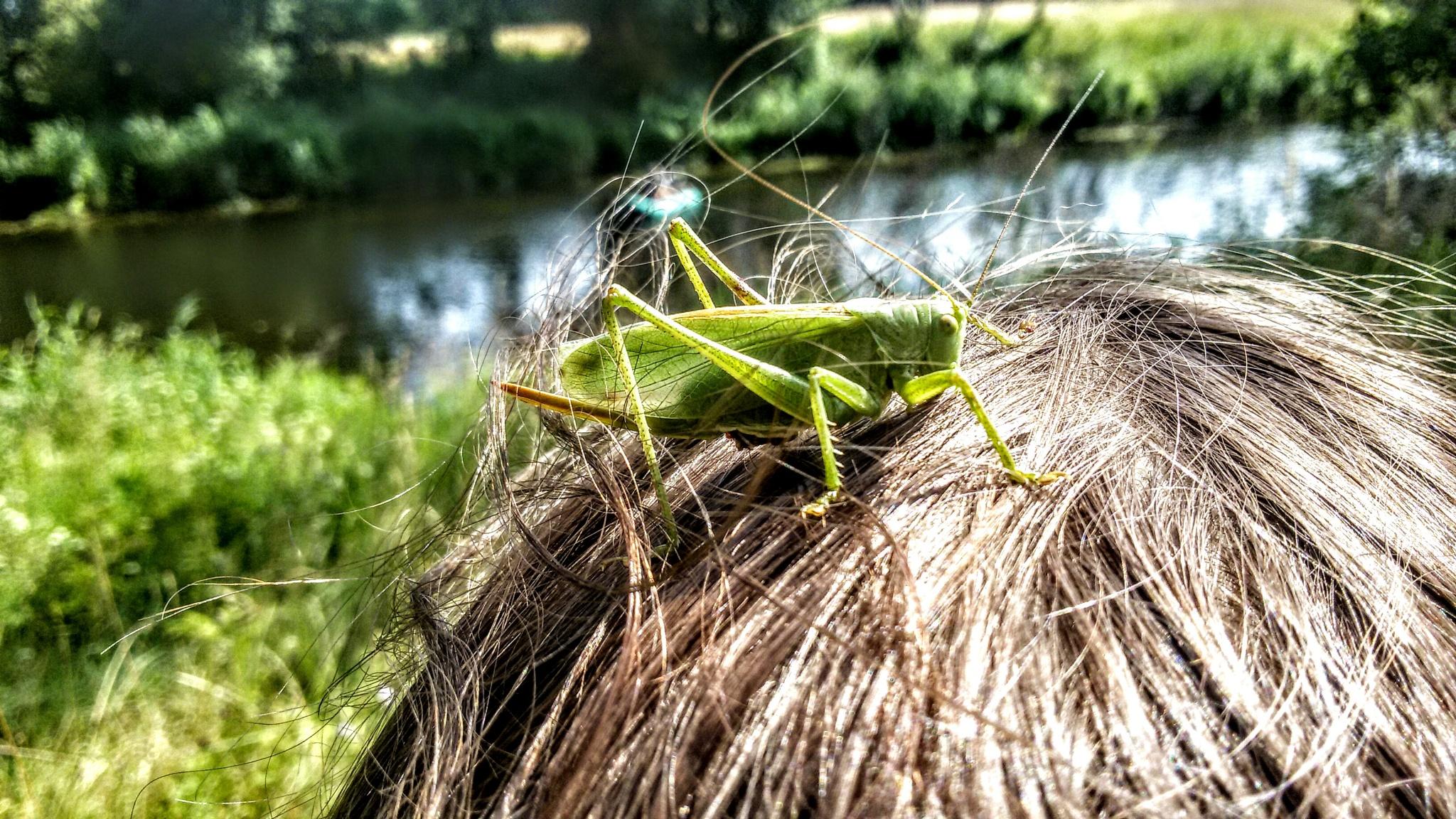 Grasshopper by uzkuraitiene62