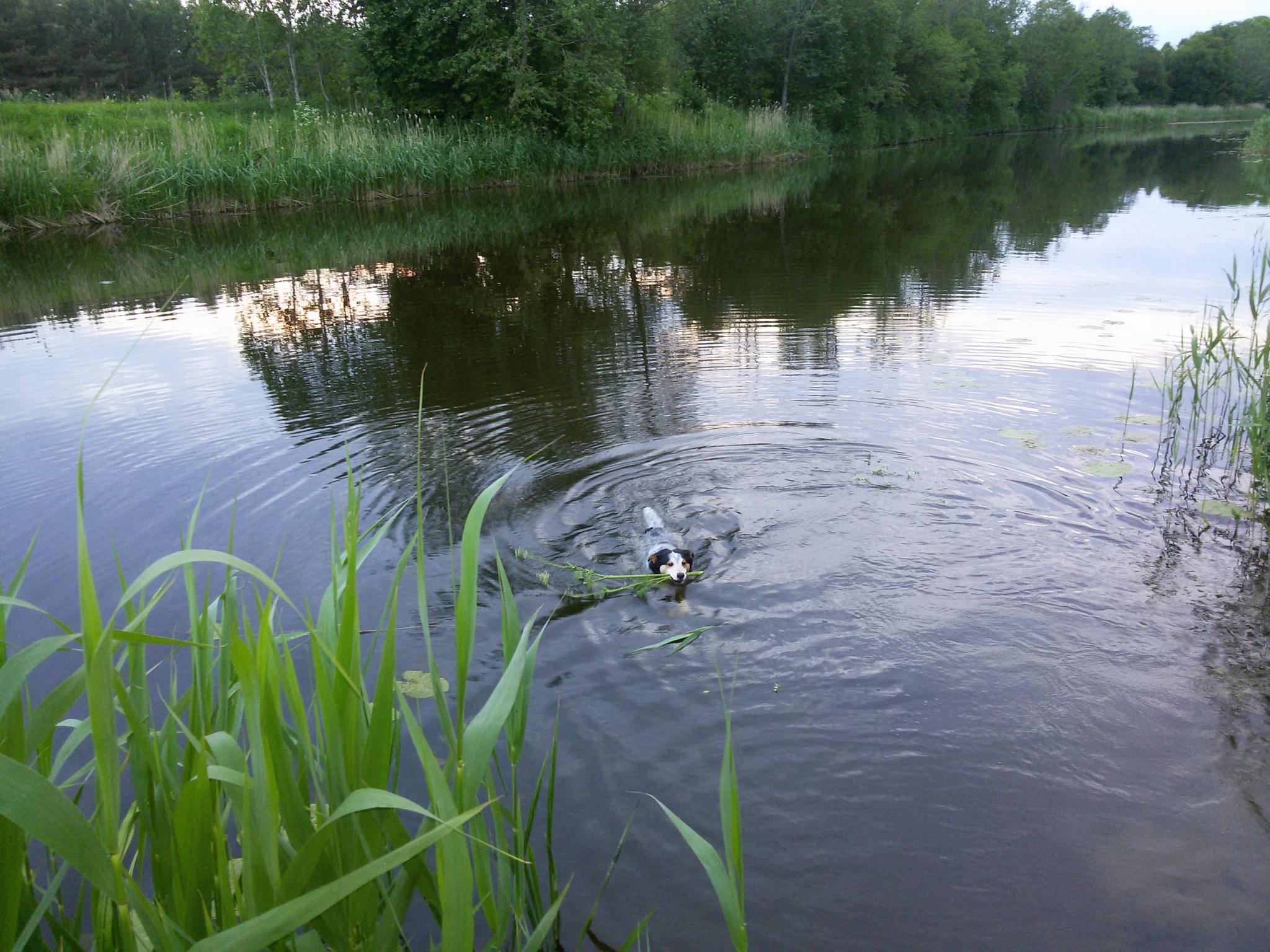 At the river by uzkuraitiene62