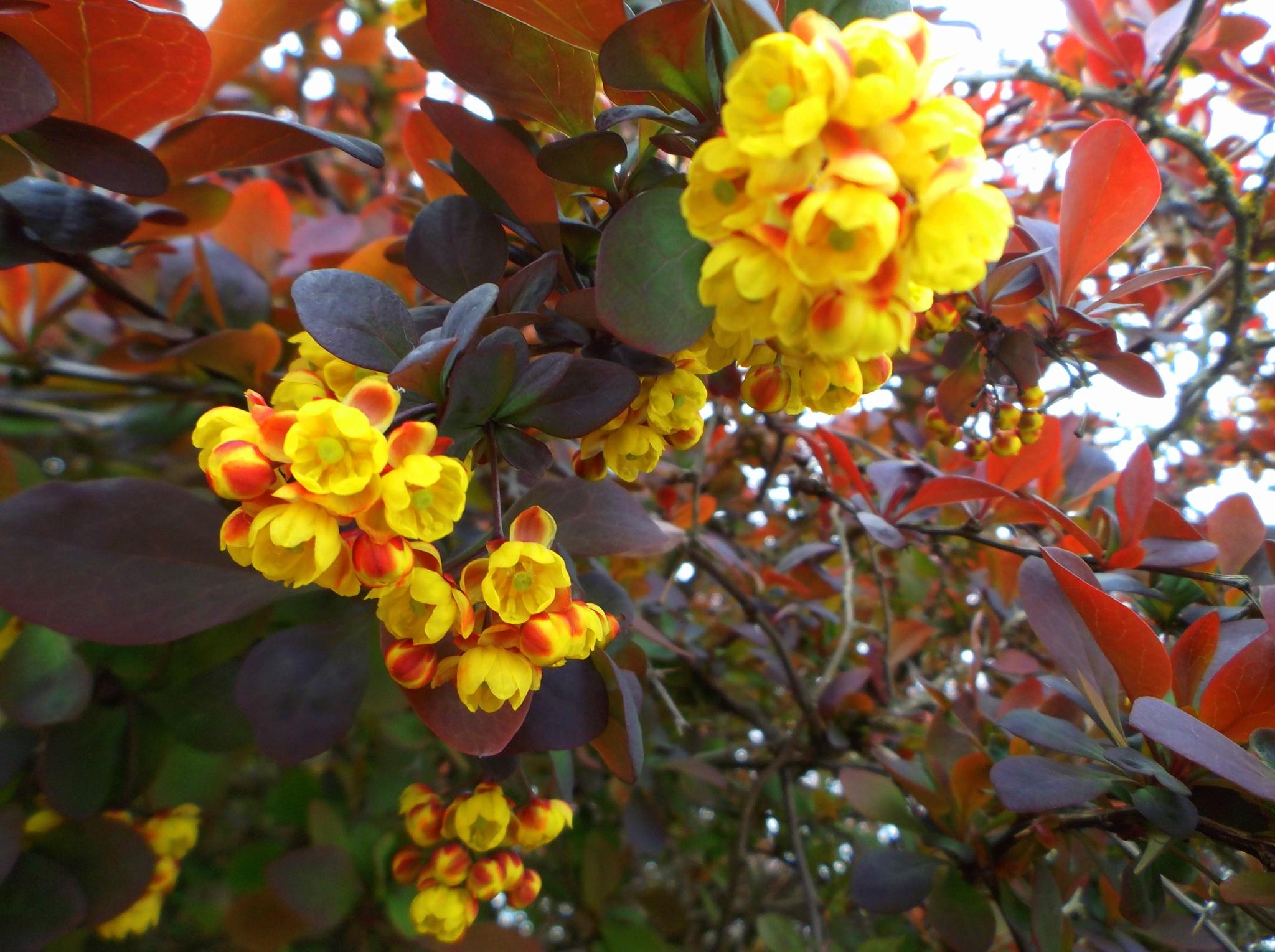 Flowering shrub by uzkuraitiene62