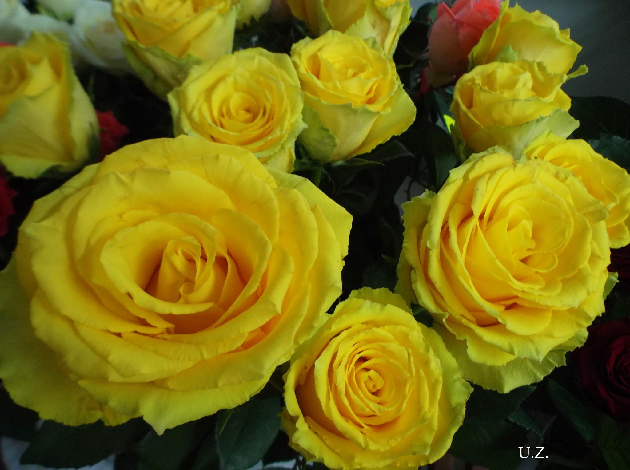Yelow roses by uzkuraitiene62