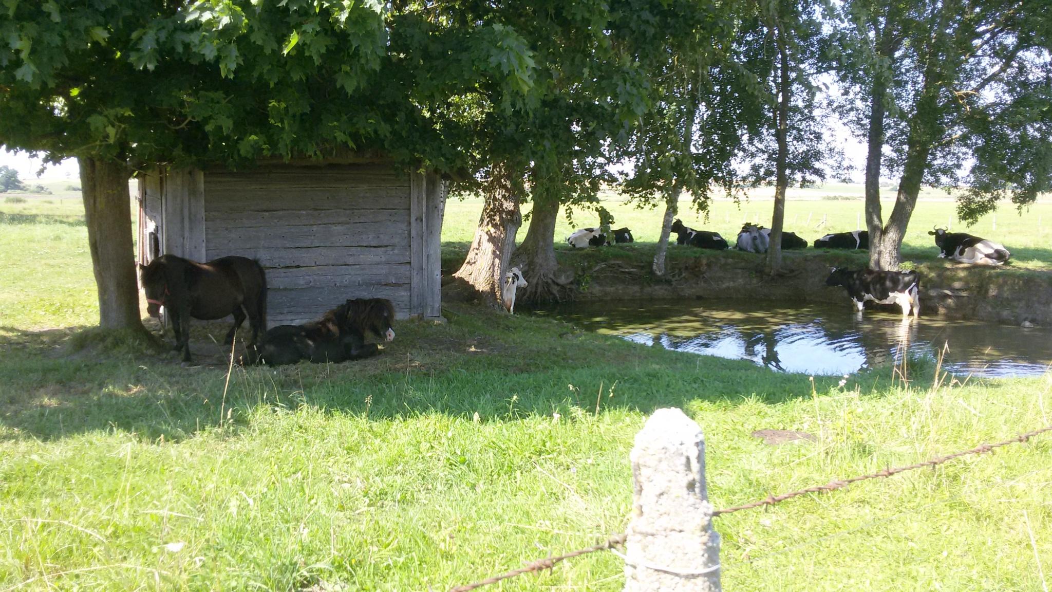 Summer in the village by uzkuraitiene62