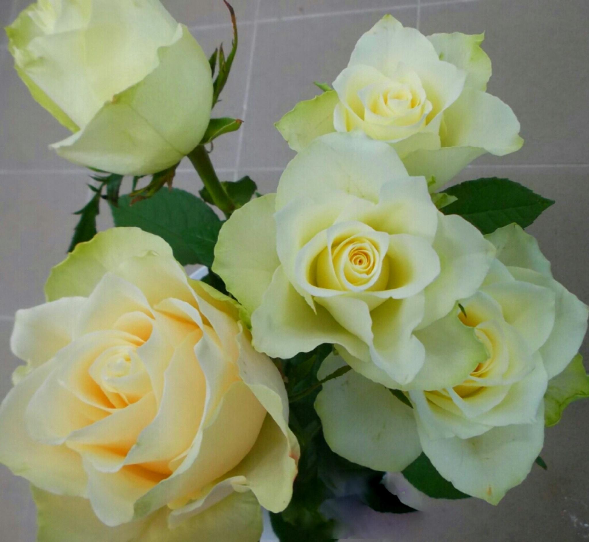 White roses by uzkuraitiene62