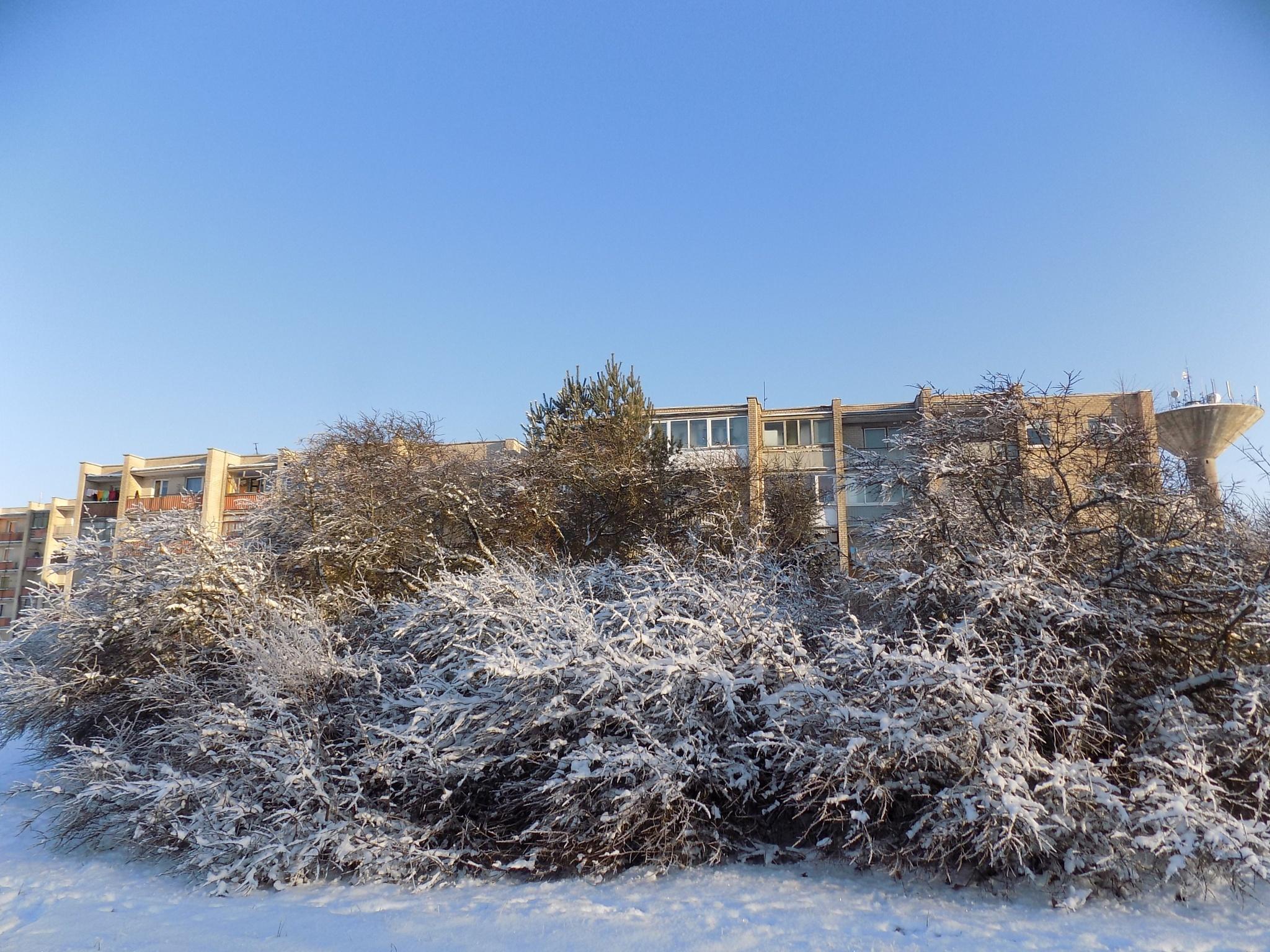 Winter day by uzkuraitiene62