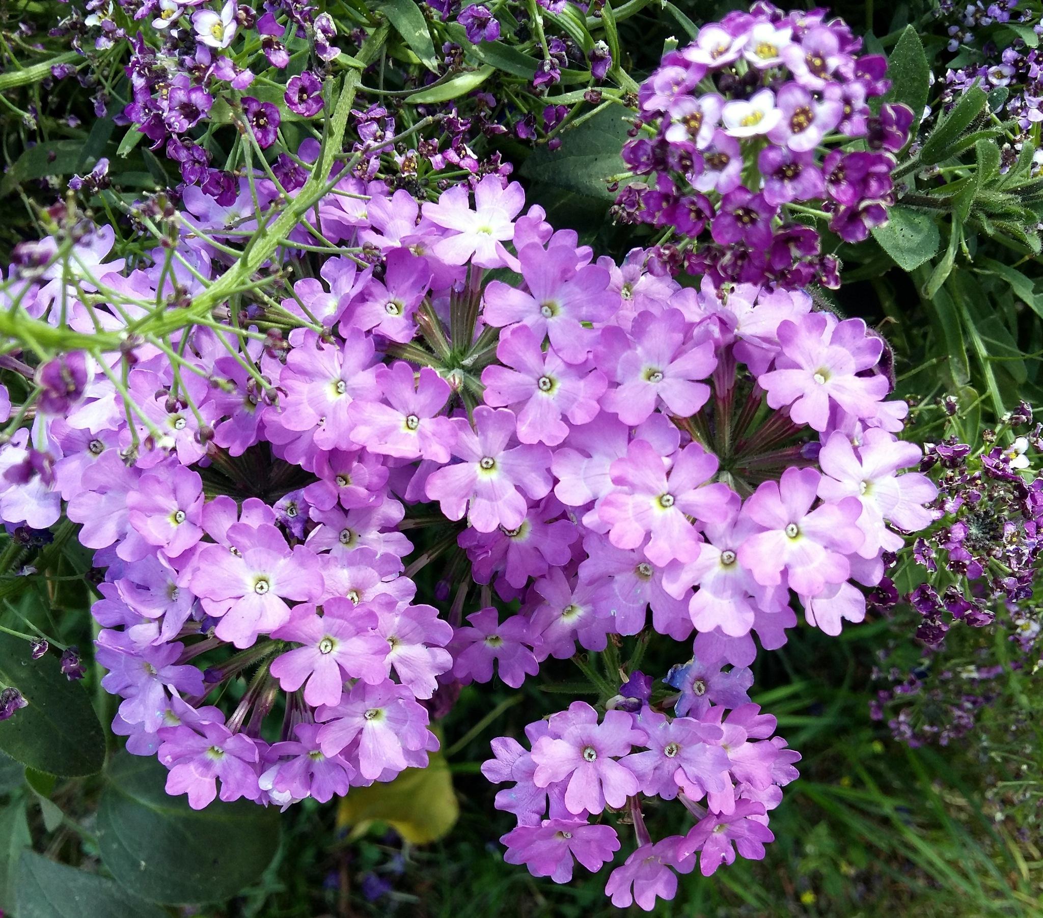 Small flowers. by uzkuraitiene62
