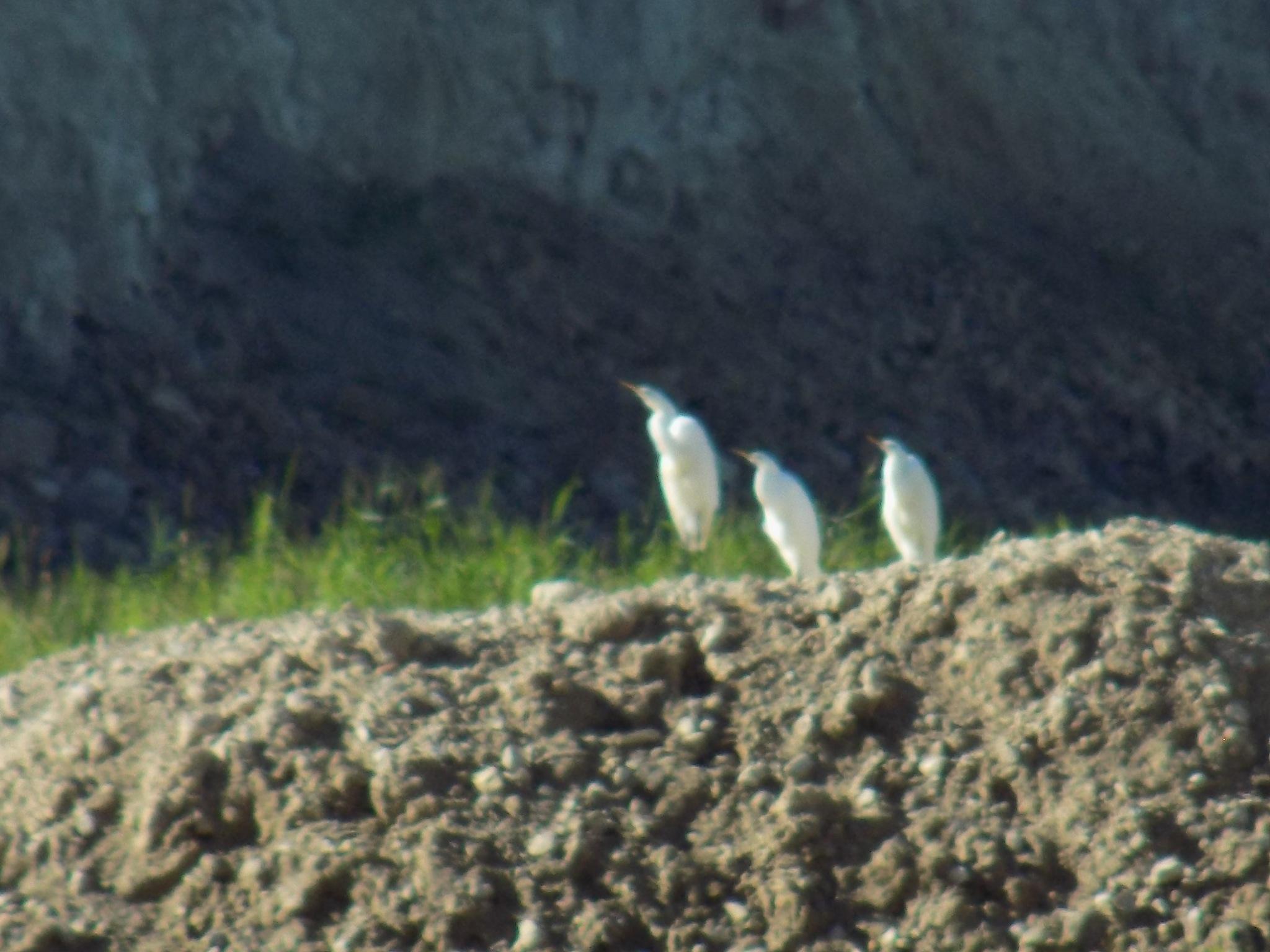 Birds in the distance by uzkuraitiene62