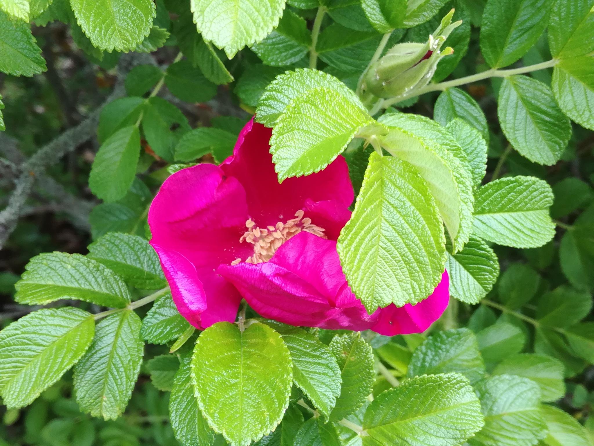 Flower between leaves by uzkuraitiene62