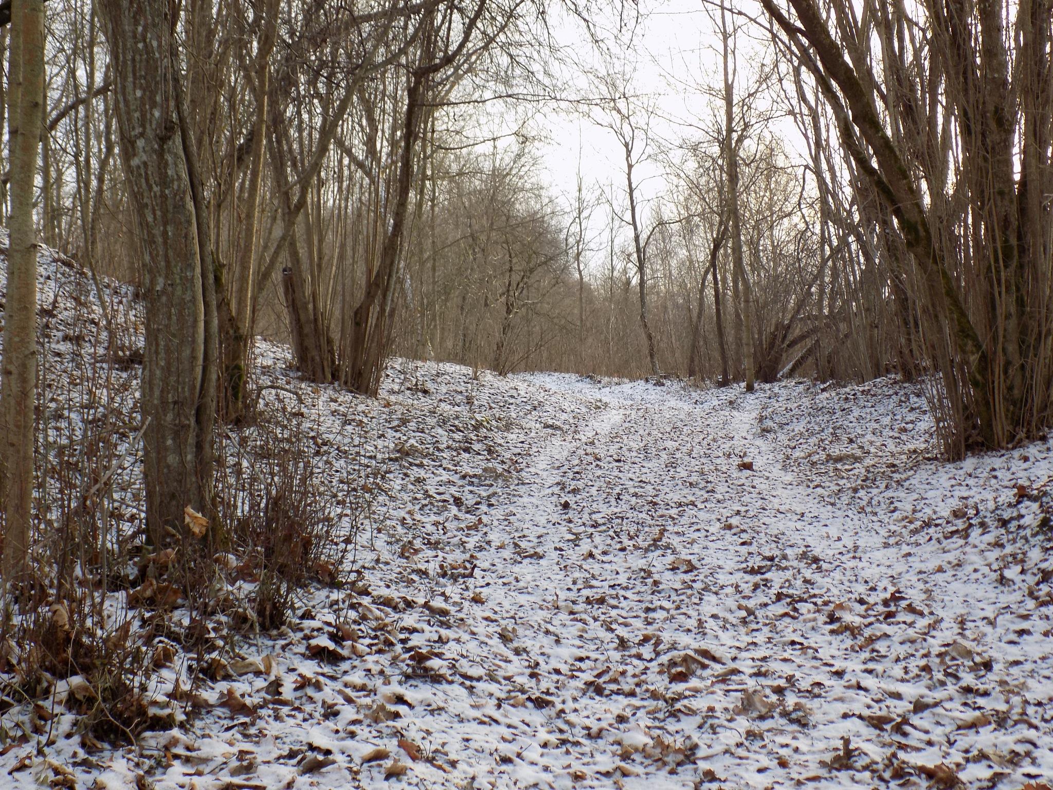 Pathway by uzkuraitiene62