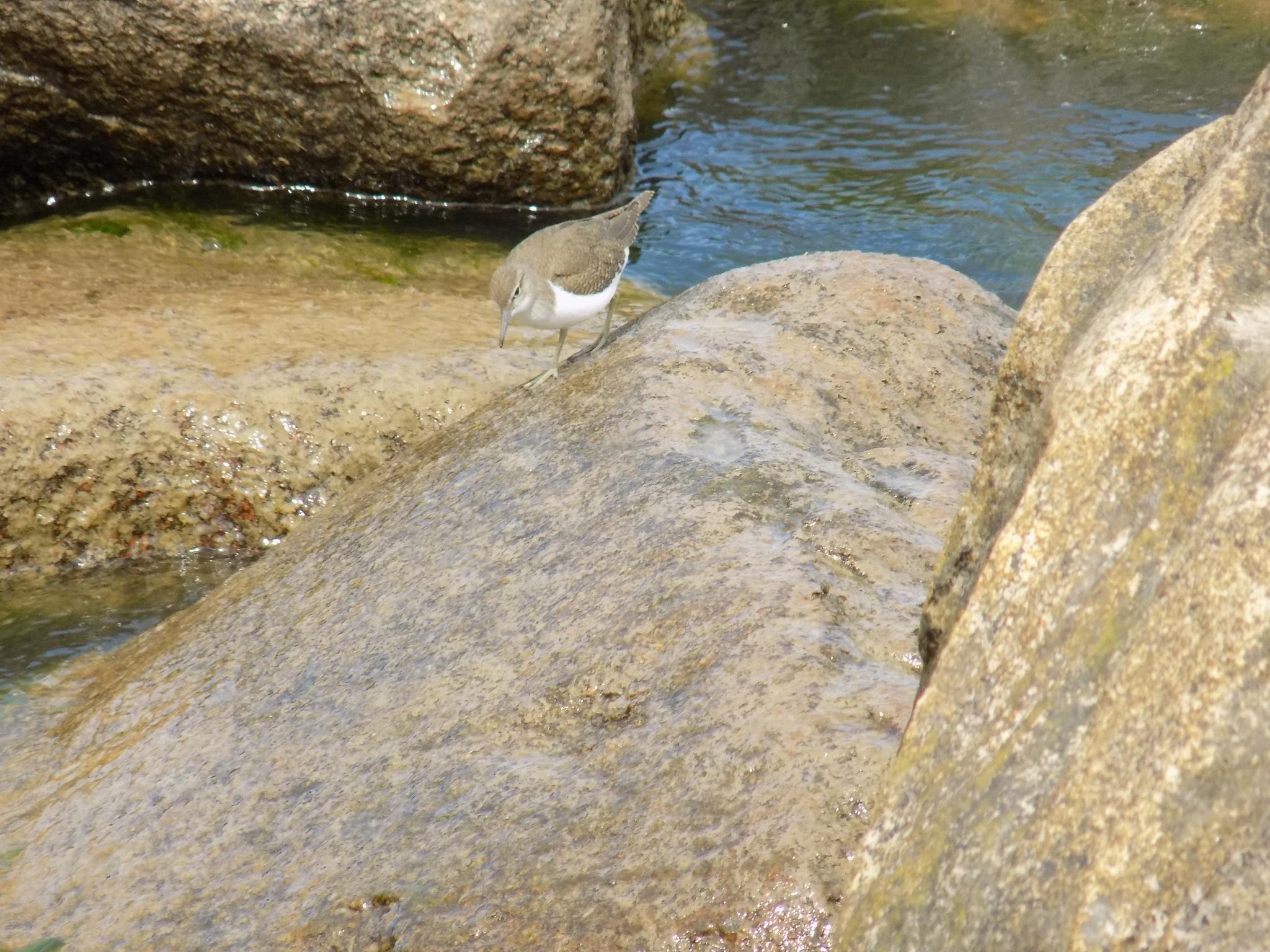 Bird on the stone by uzkuraitiene62