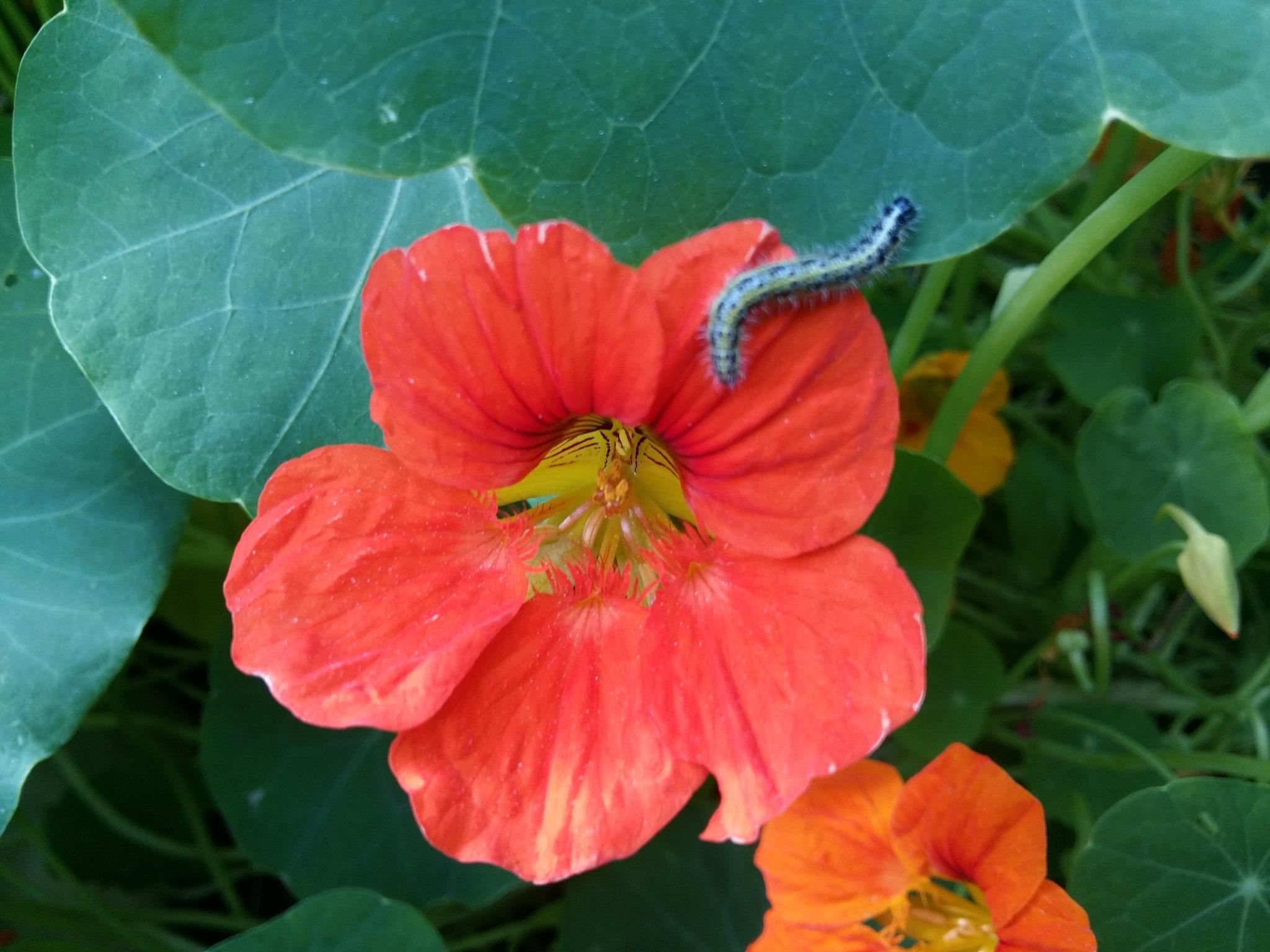 Flower and caterpillar by uzkuraitiene62