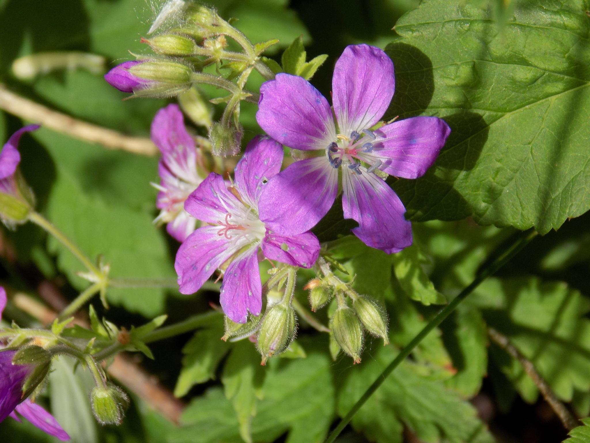 Purple wild flowers. by uzkuraitiene62