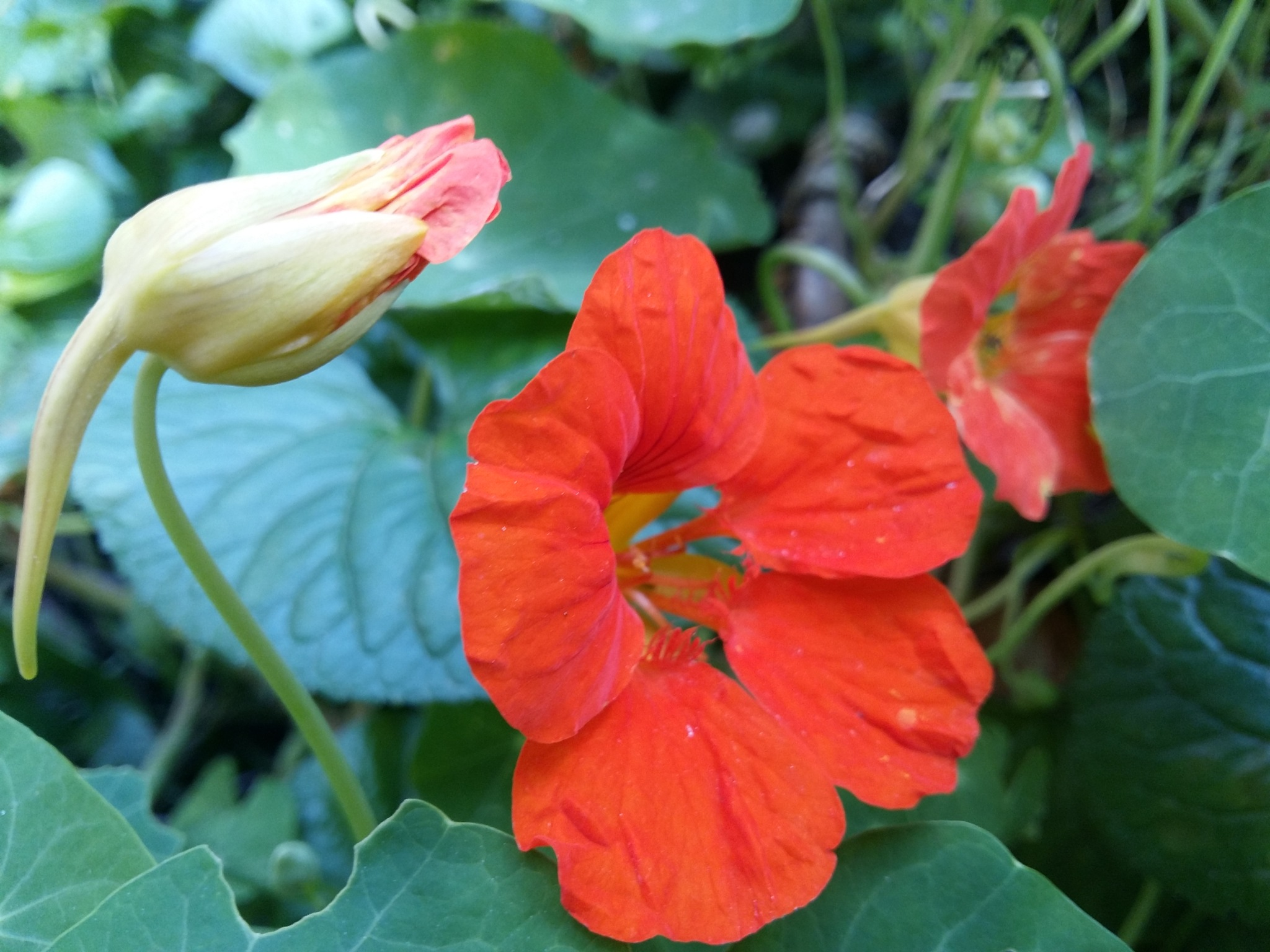 Orange flowers by uzkuraitiene62