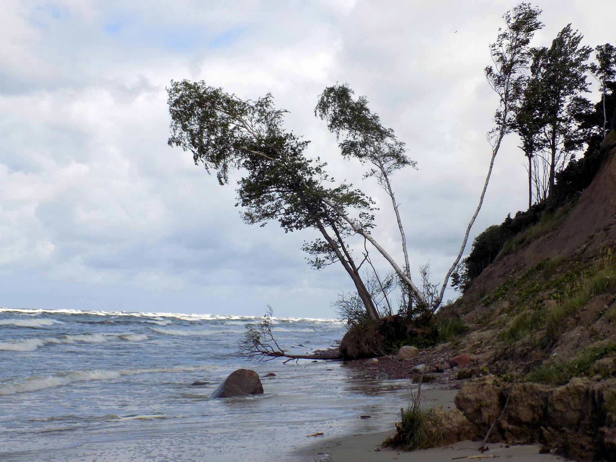 Tres on the seashore by uzkuraitiene62