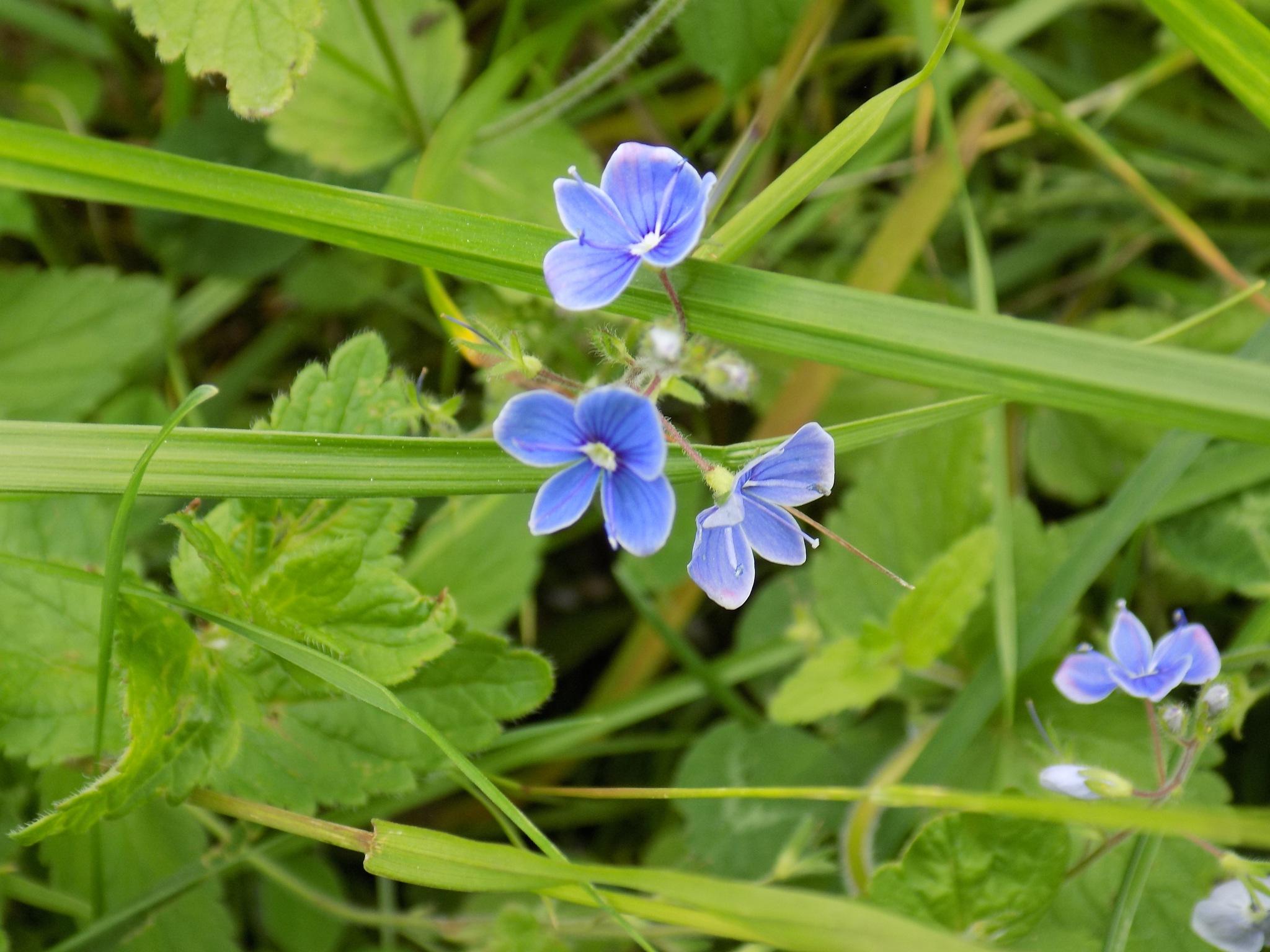 Meadows flowers by uzkuraitiene62