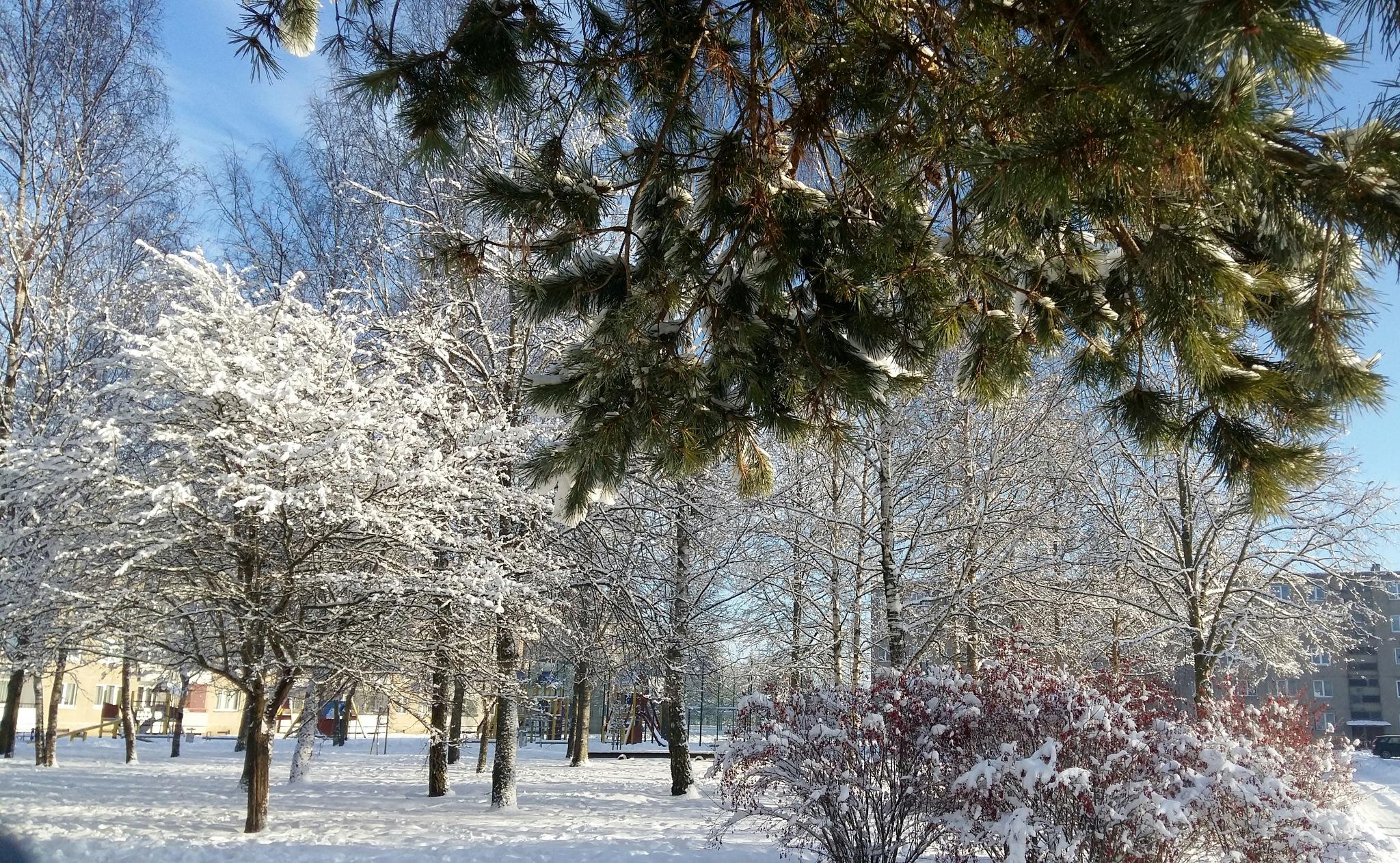 The park trees. by uzkuraitiene62