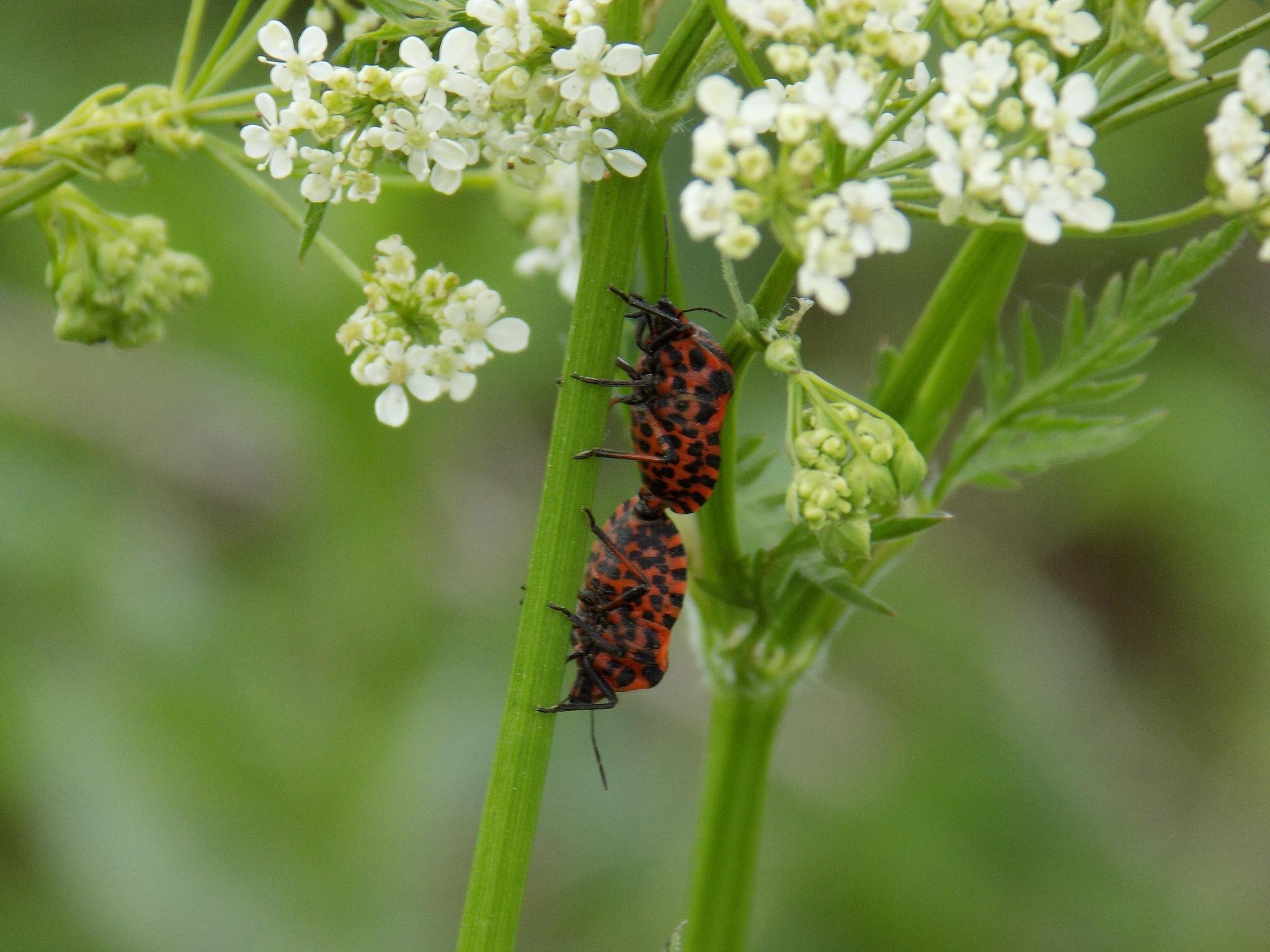 Beetles. by uzkuraitiene62