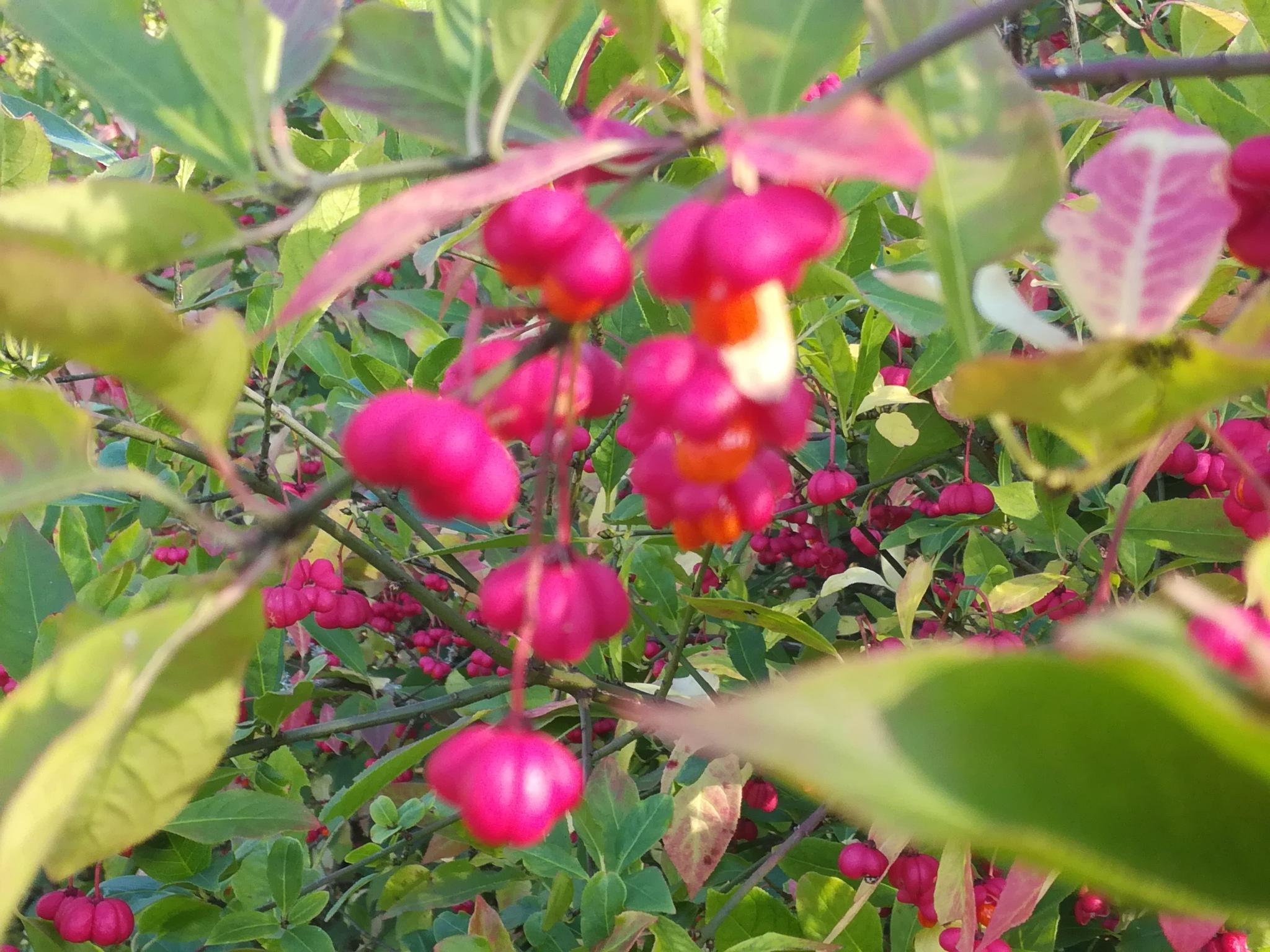 In autumn by uzkuraitiene62