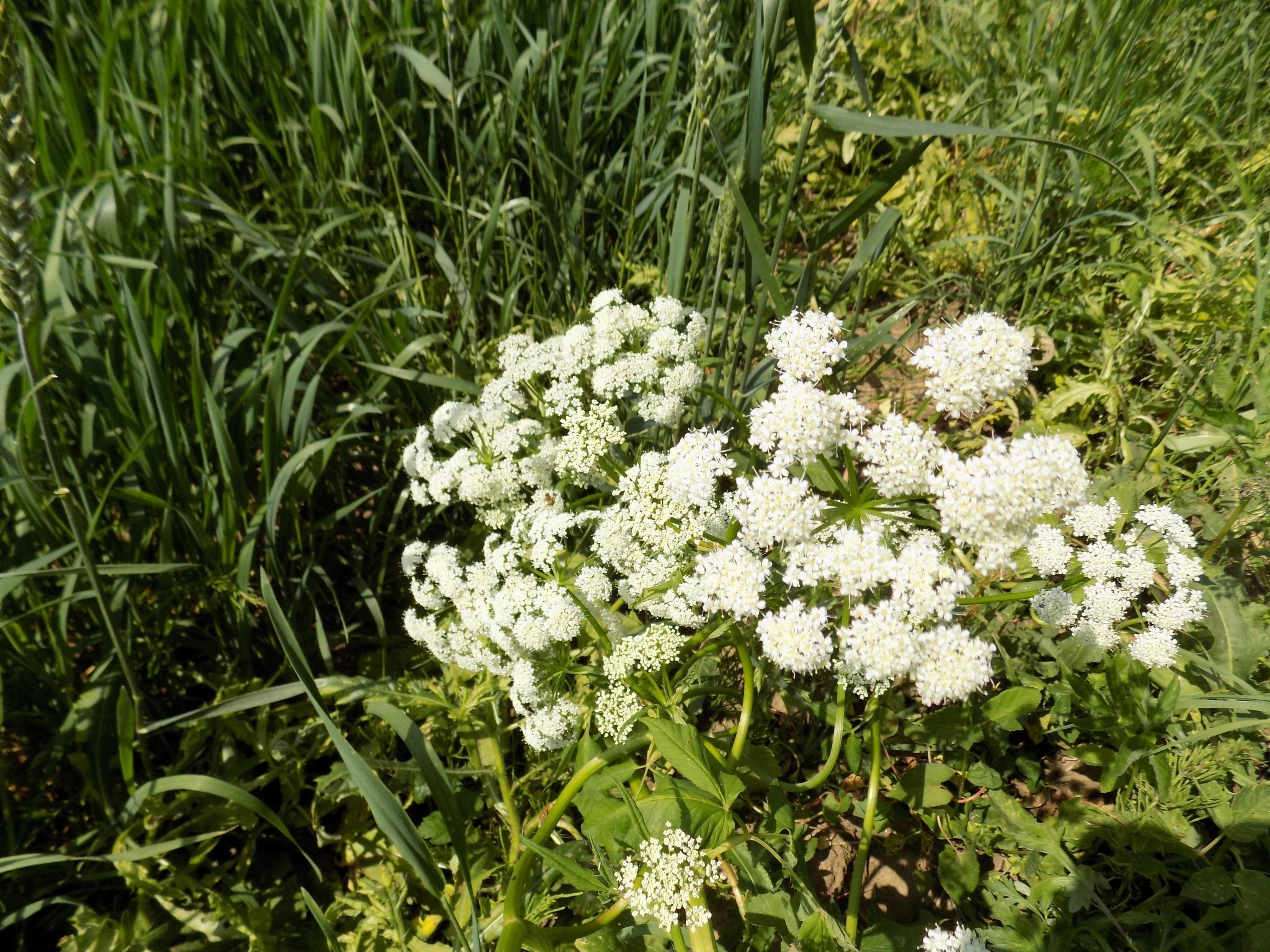 Grass by uzkuraitiene62