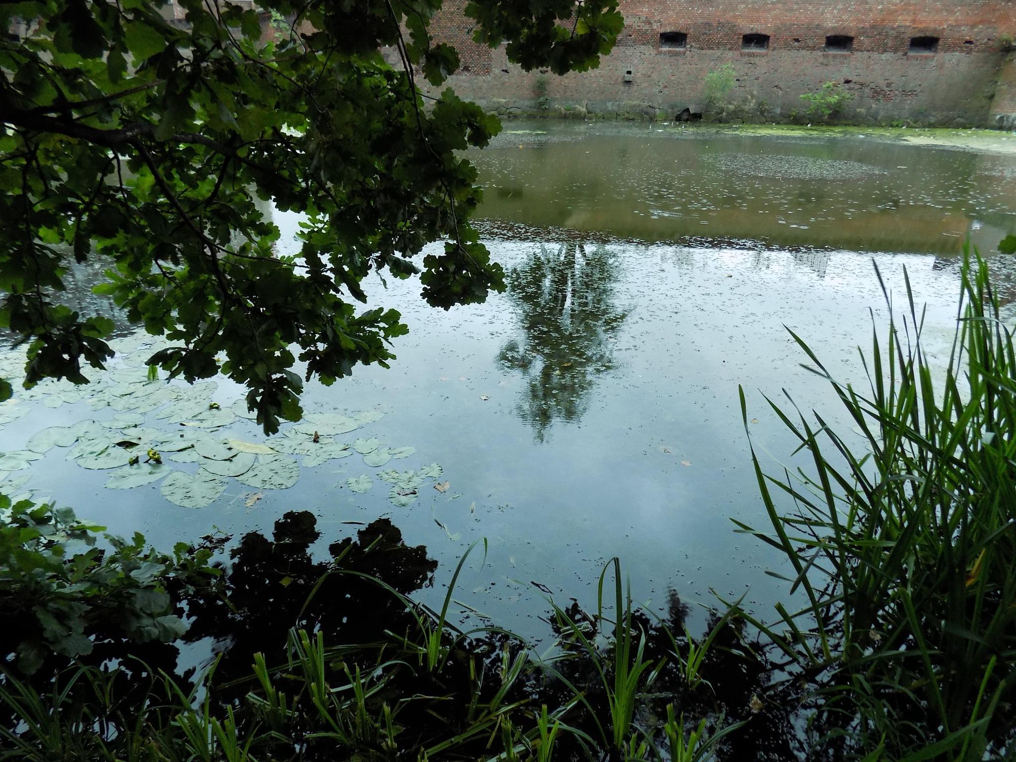Pond by uzkuraitiene62