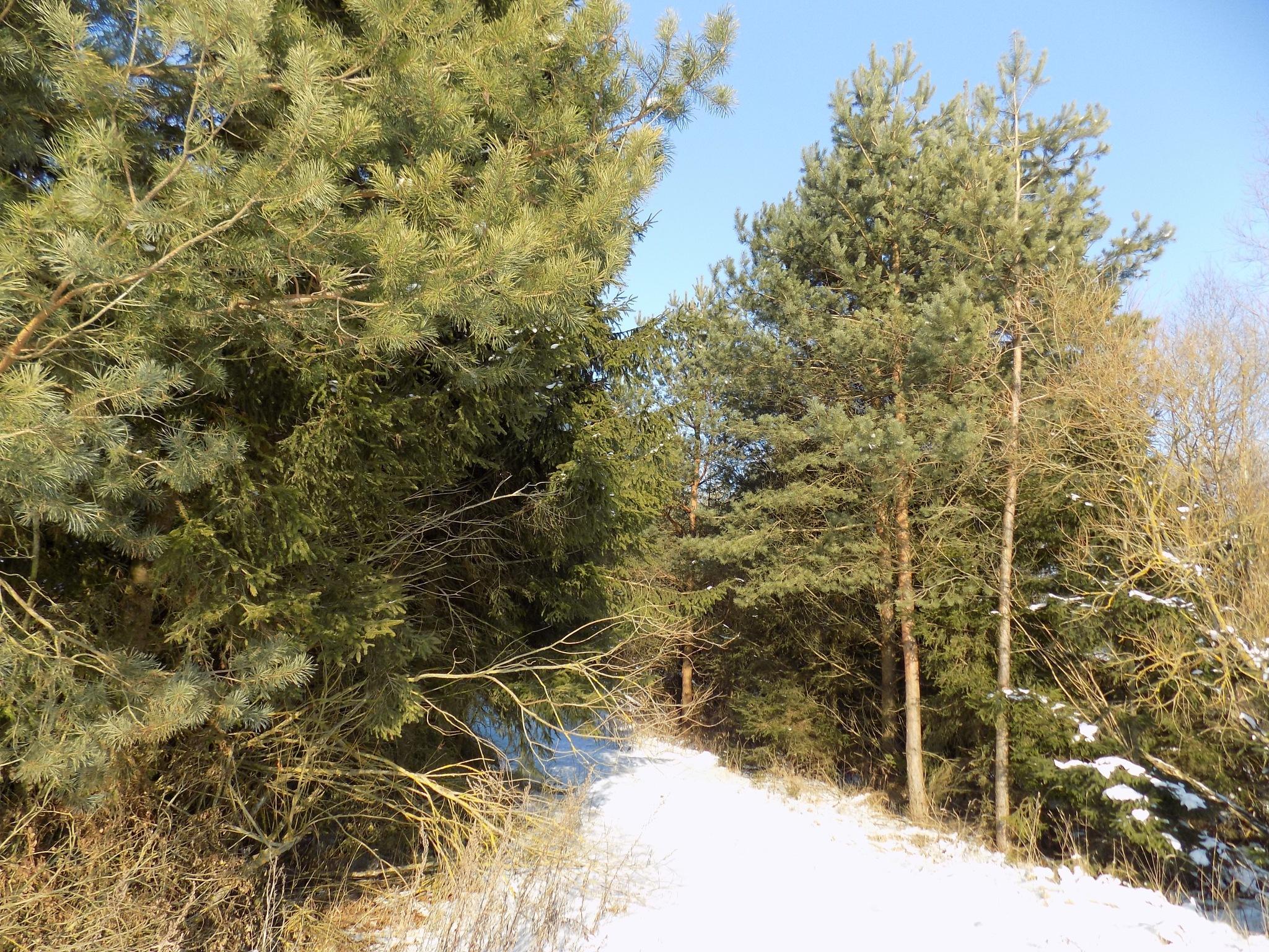 Nature in winter by uzkuraitiene62