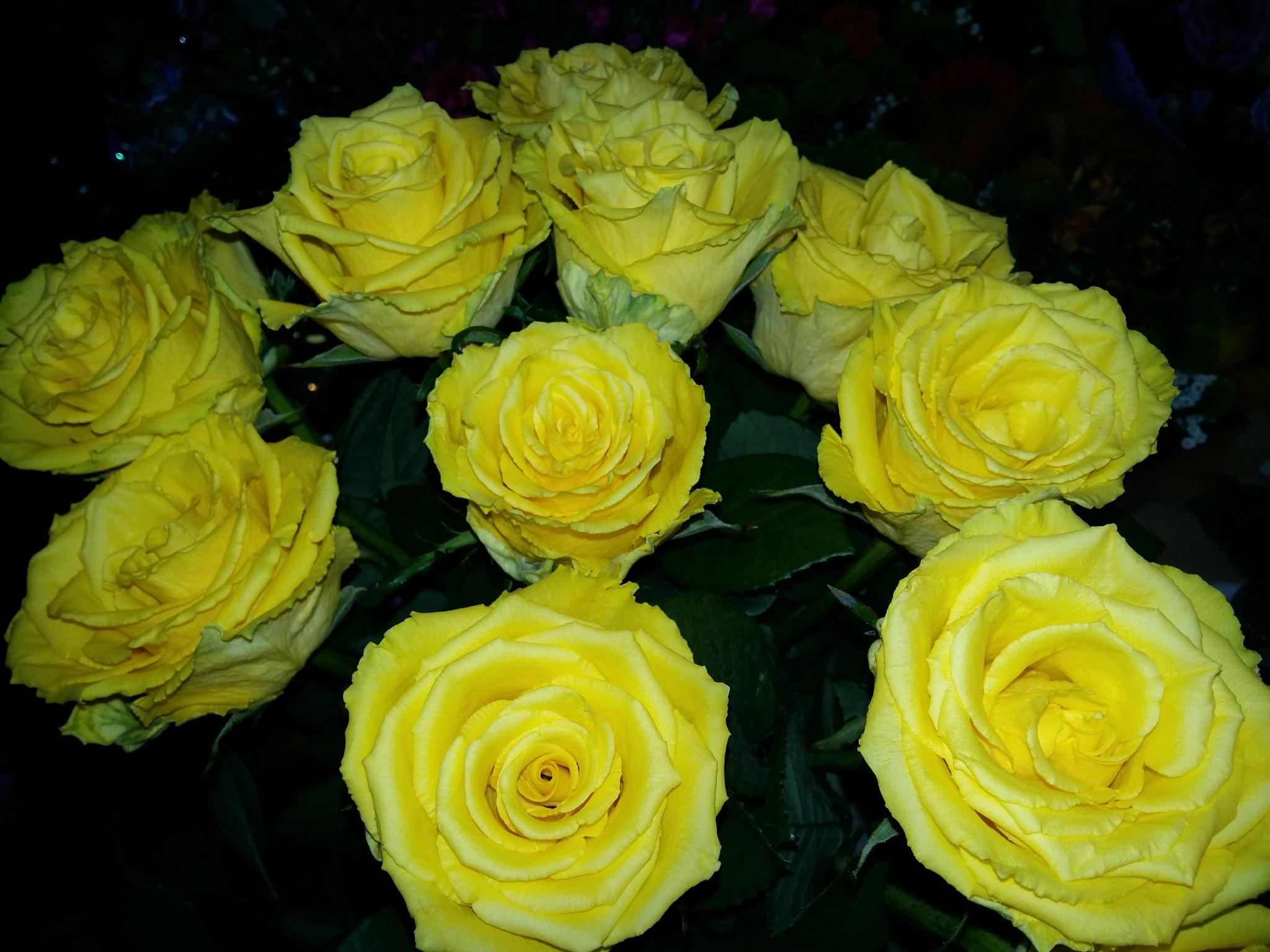 Yellow roses by uzkuraitiene62
