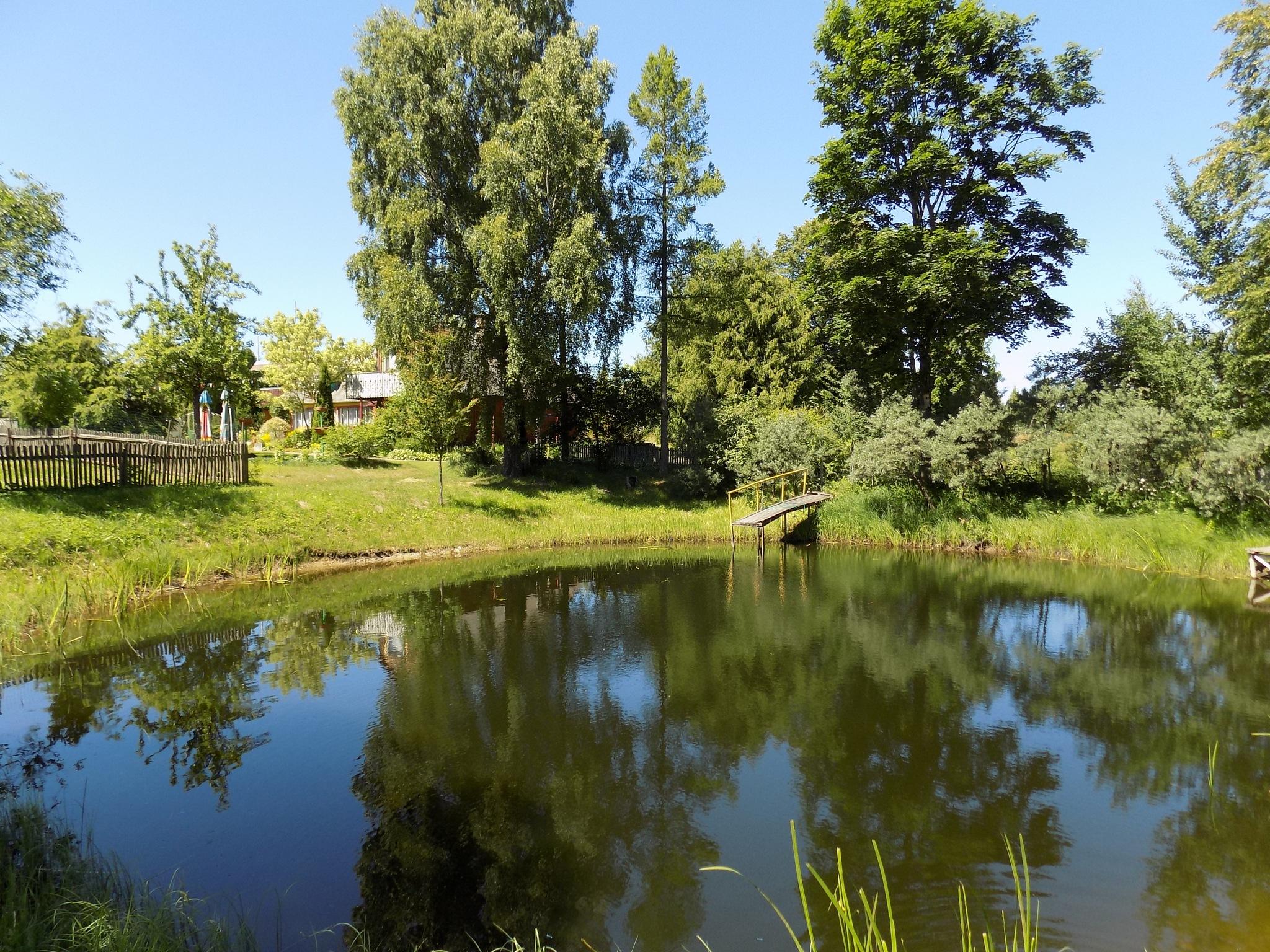 Trees next to the pond by uzkuraitiene62
