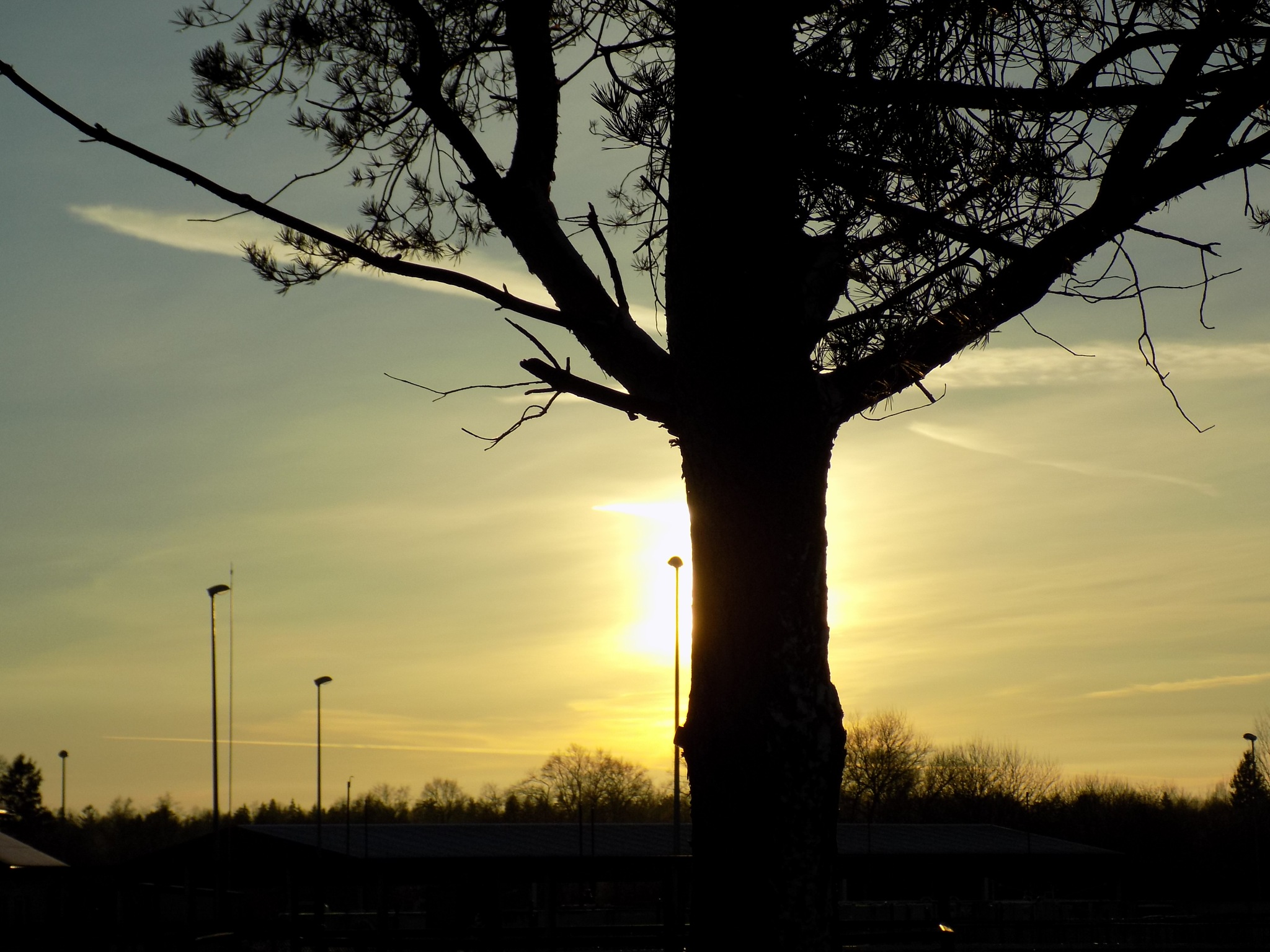 Tree by uzkuraitiene62