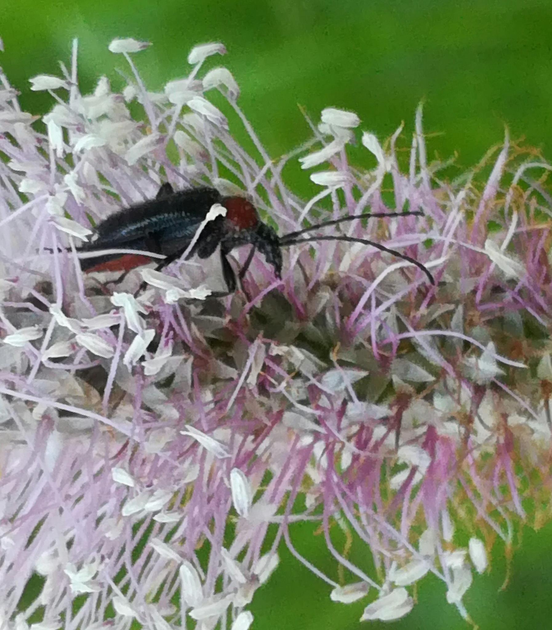 Beetle by uzkuraitiene62