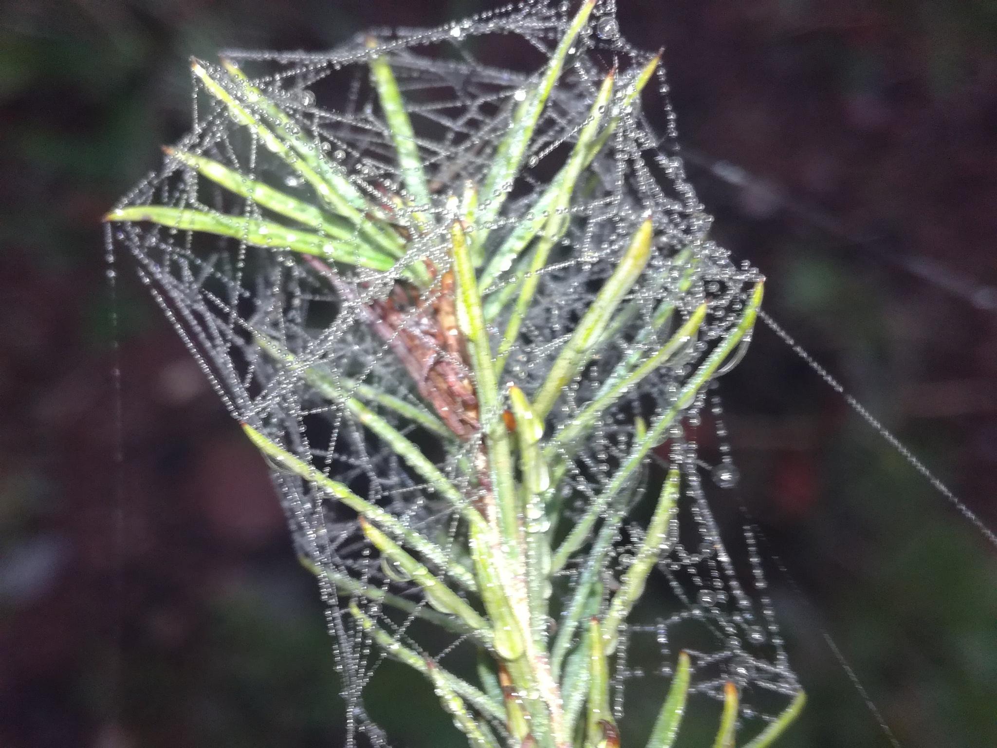 Spider's web by uzkuraitiene62