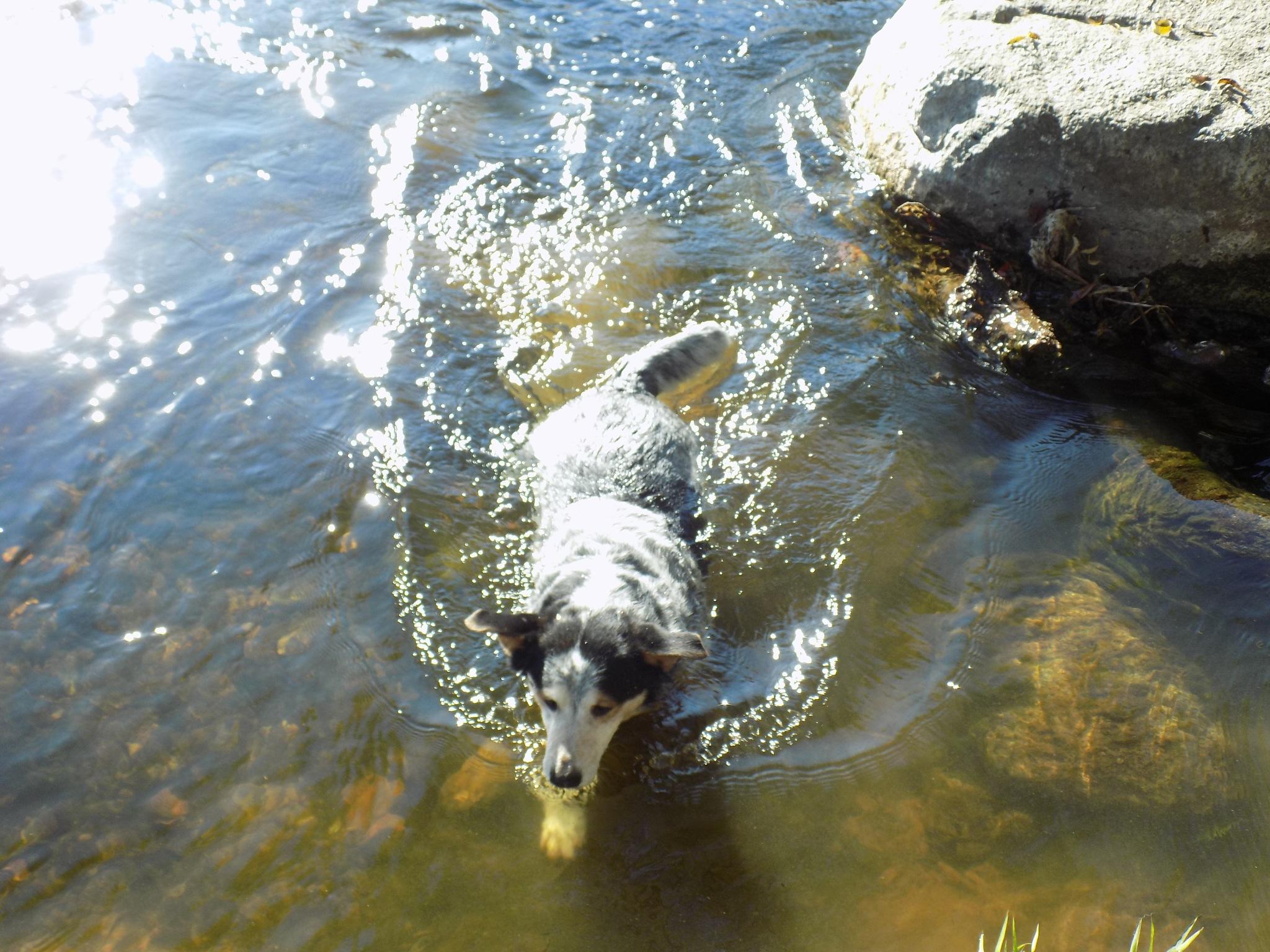 My dod likes to swim. by uzkuraitiene62