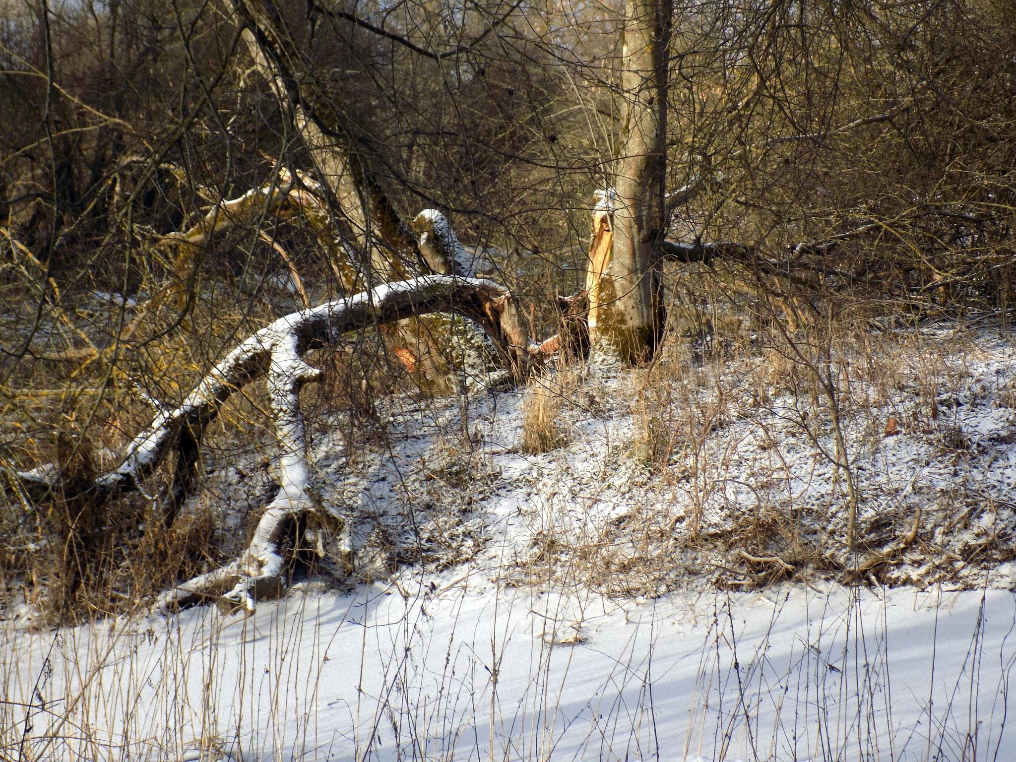 Old trees by uzkuraitiene62