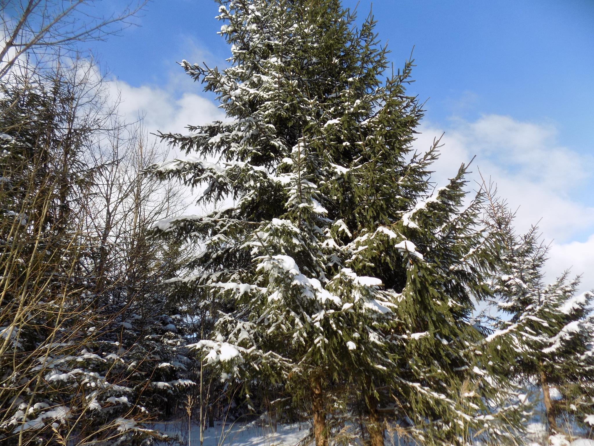 In the winter by uzkuraitiene62