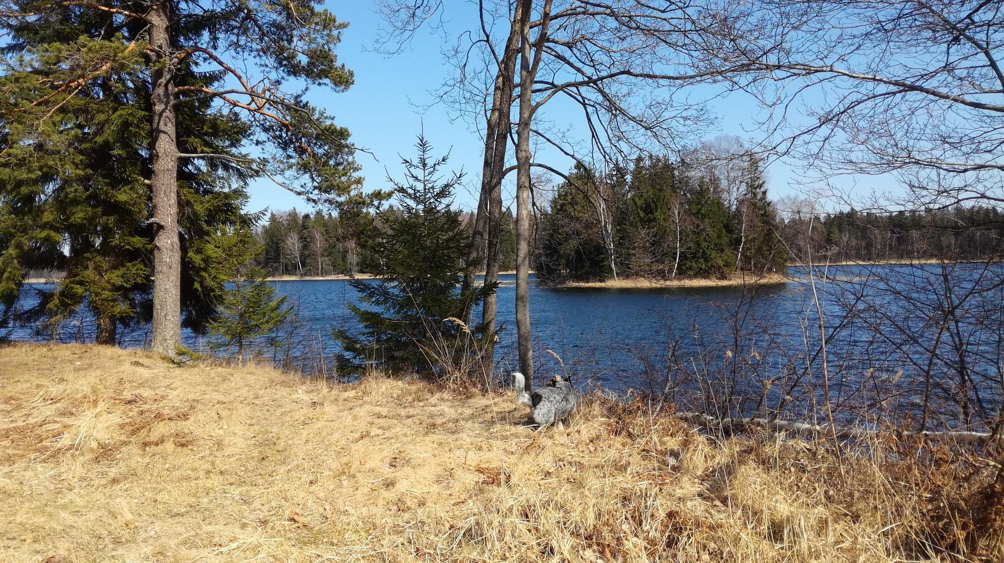 Lake Plateliai by uzkuraitiene62