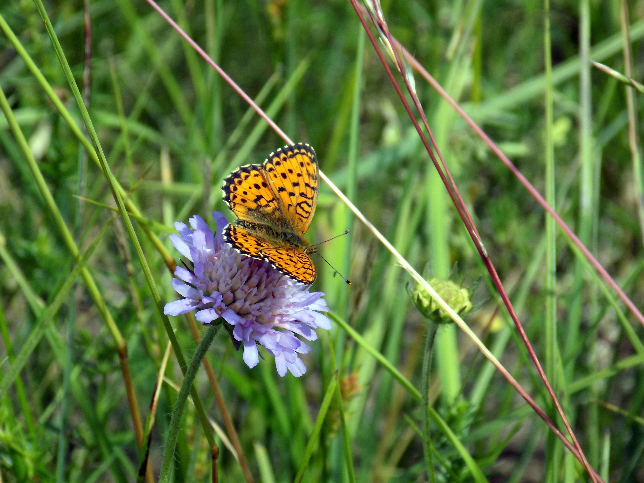 Butterfly by uzkuraitiene62