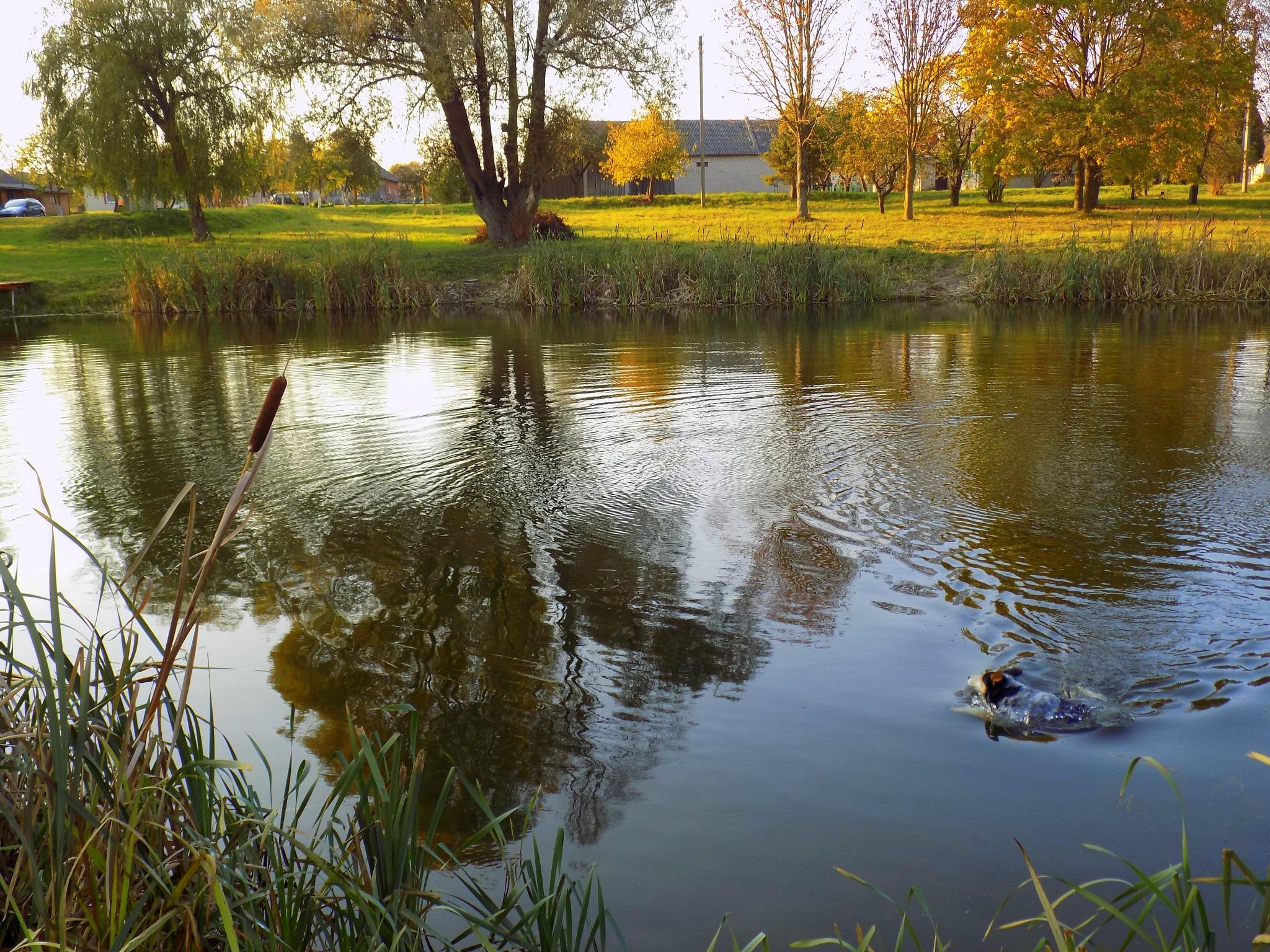 Autumn evening by uzkuraitiene62