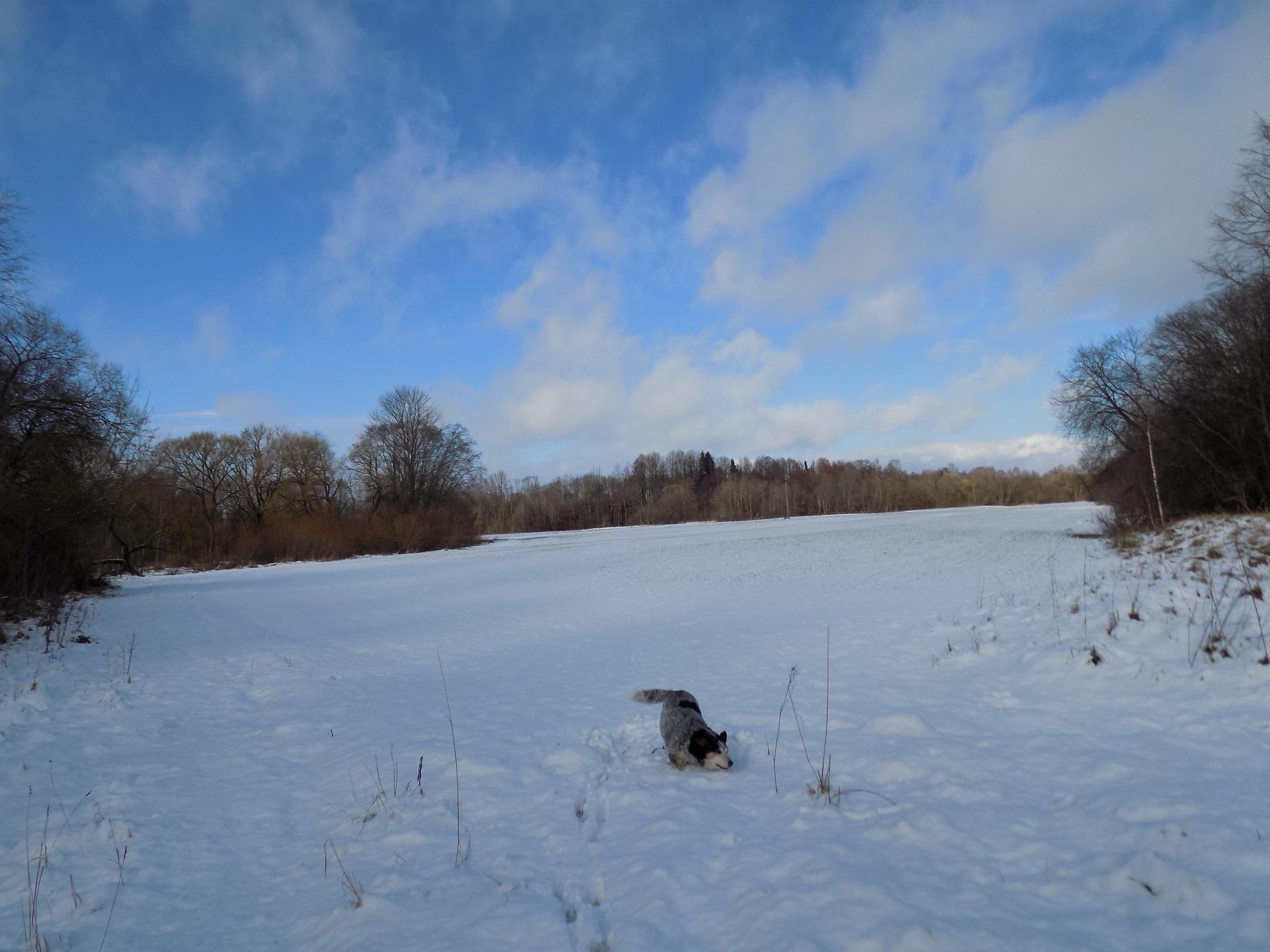 In the winter day by uzkuraitiene62