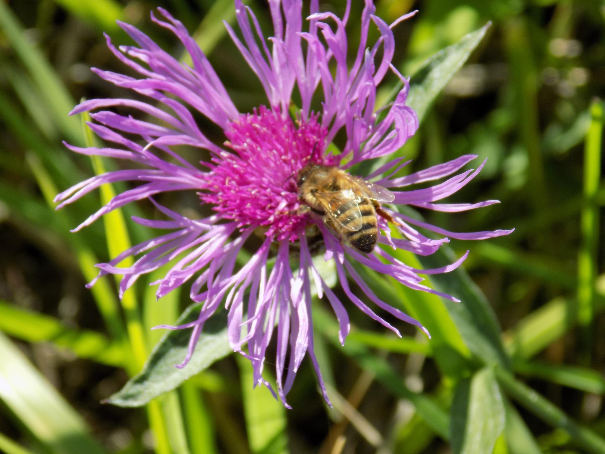 Flower with bee by uzkuraitiene62