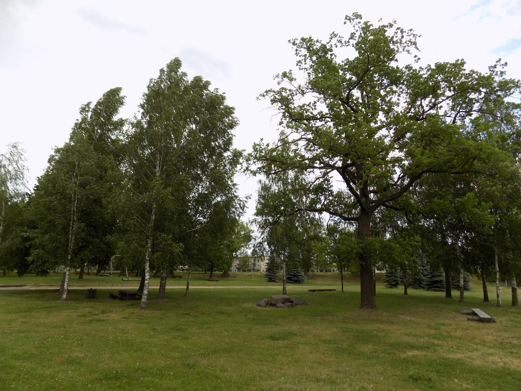 Park. by uzkuraitiene62