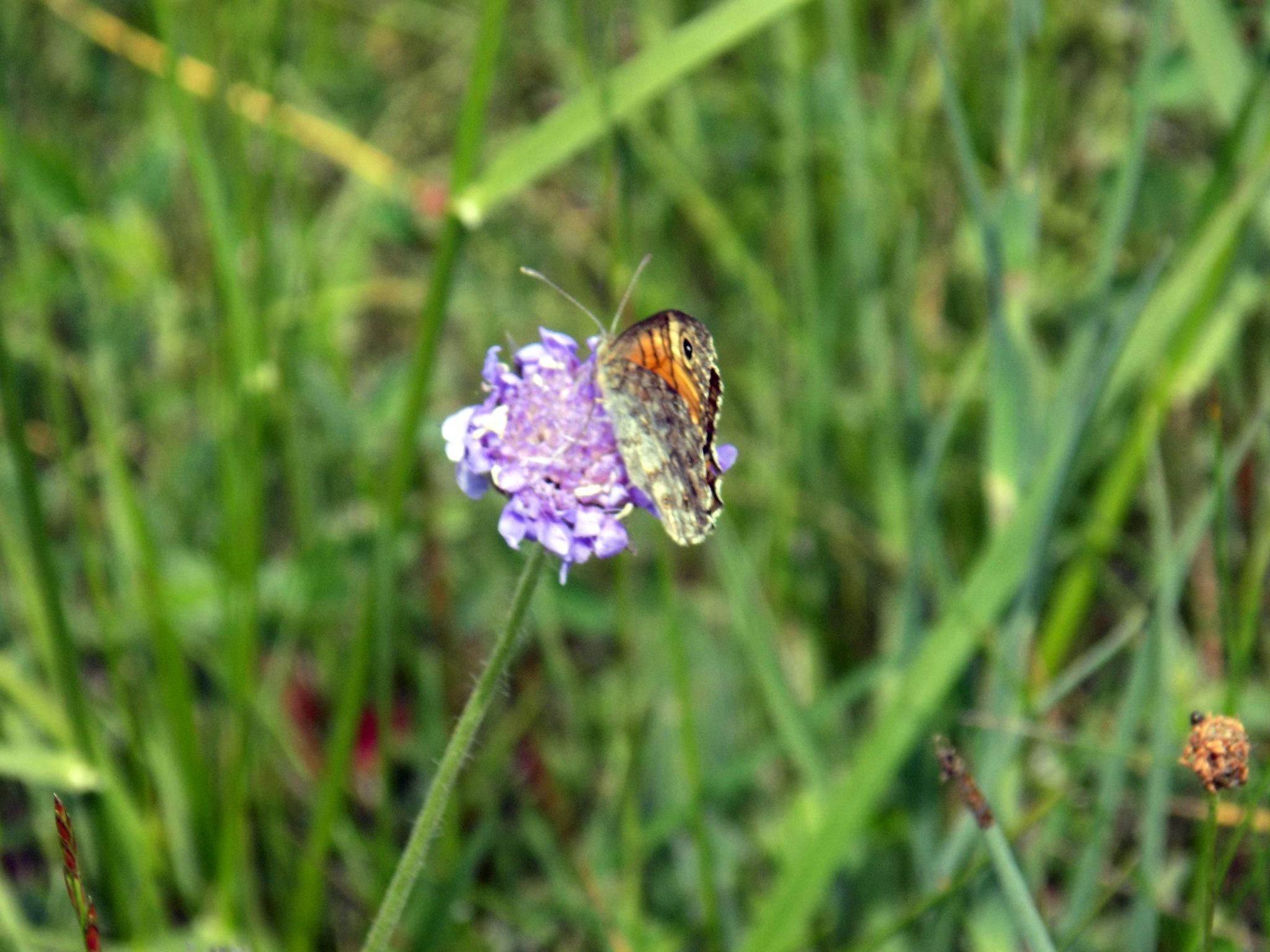 Flower with butterfly. by uzkuraitiene62