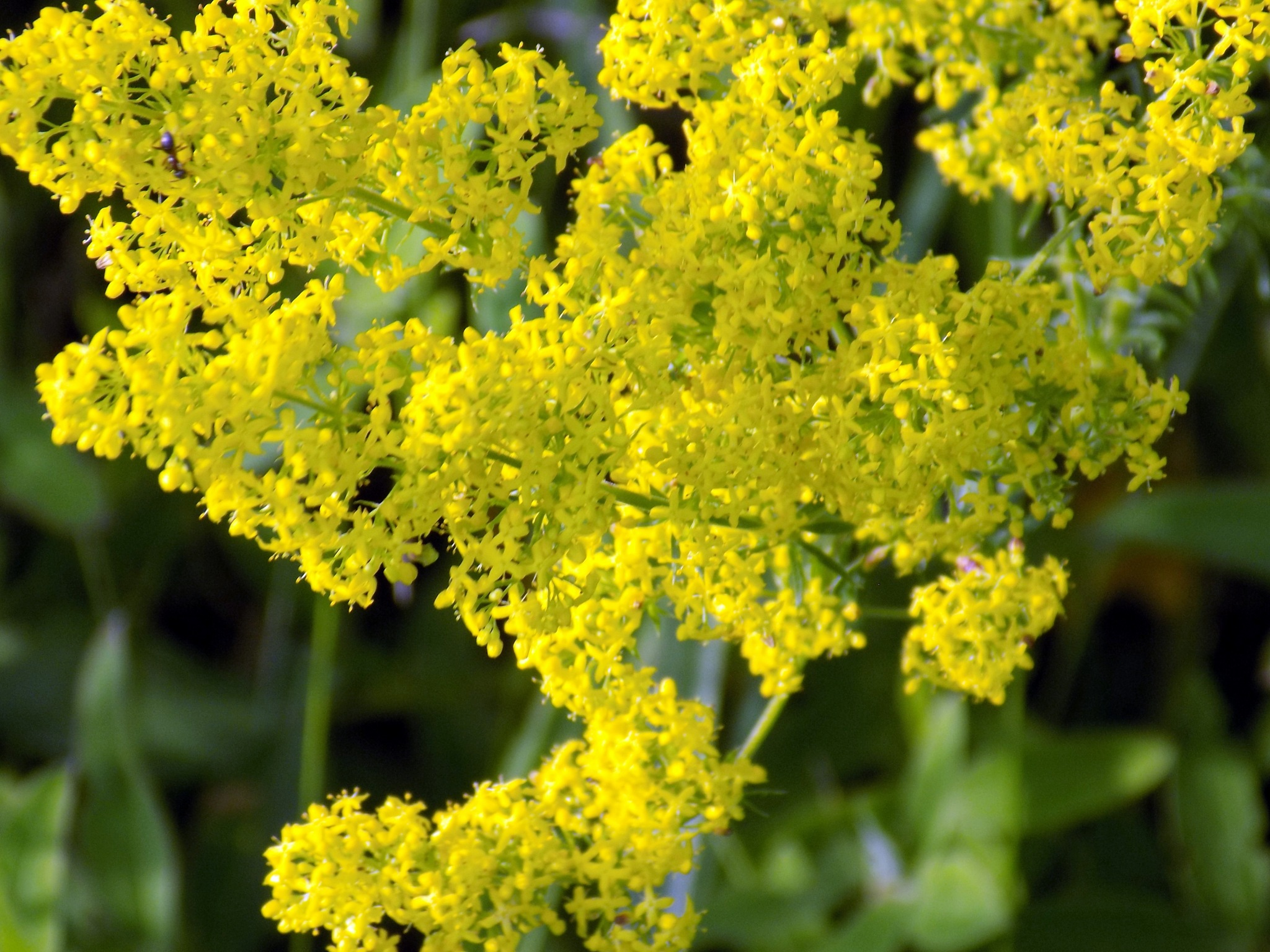 Blooming grass by uzkuraitiene62