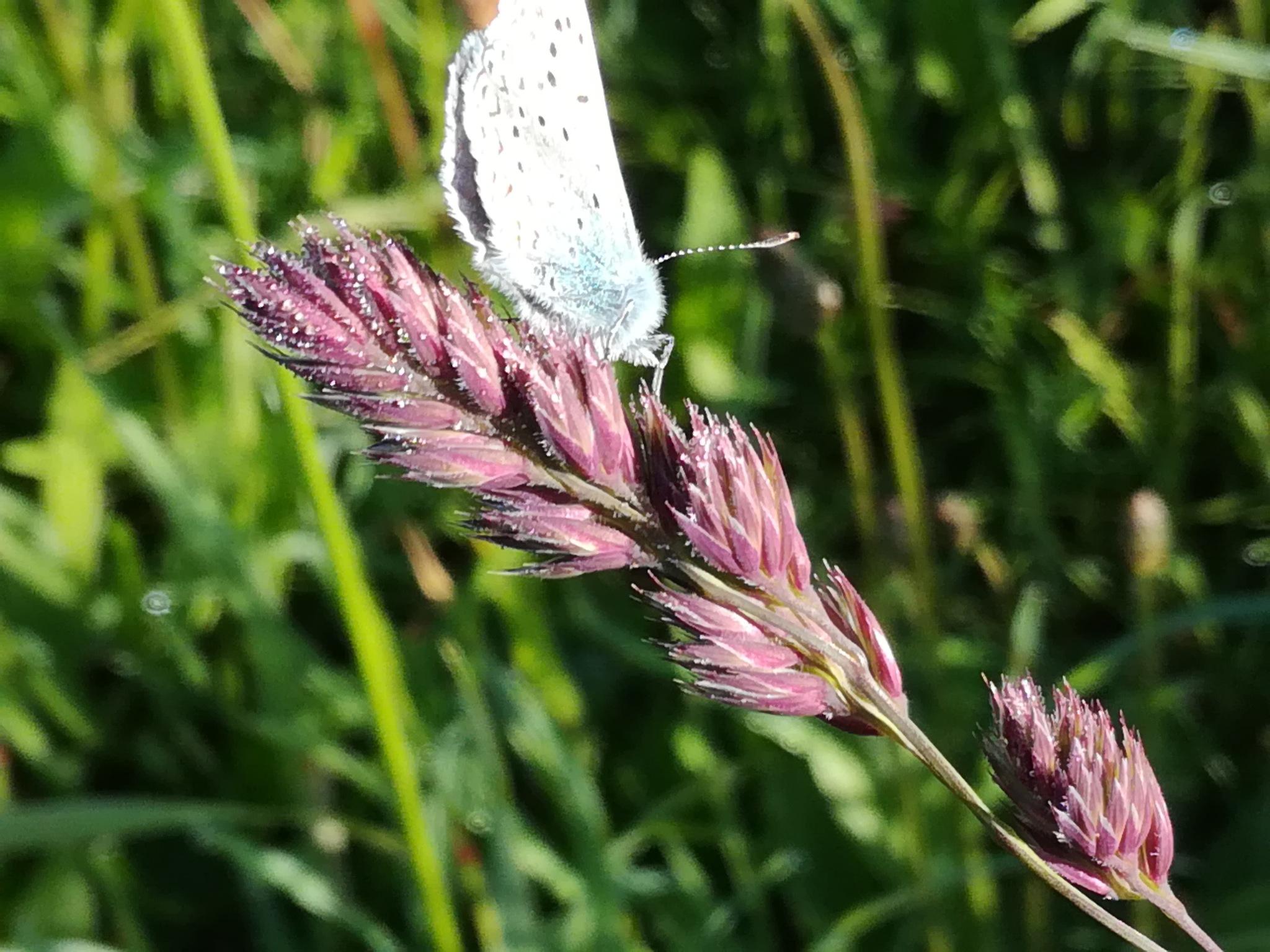 Grass with butterfly by uzkuraitiene62